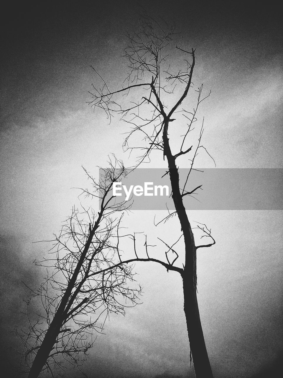 bare tree, branch, tree, lone, tranquility, nature, isolated, beauty in nature, landscape, tree trunk, tranquil scene, outdoors, no people, day, sky