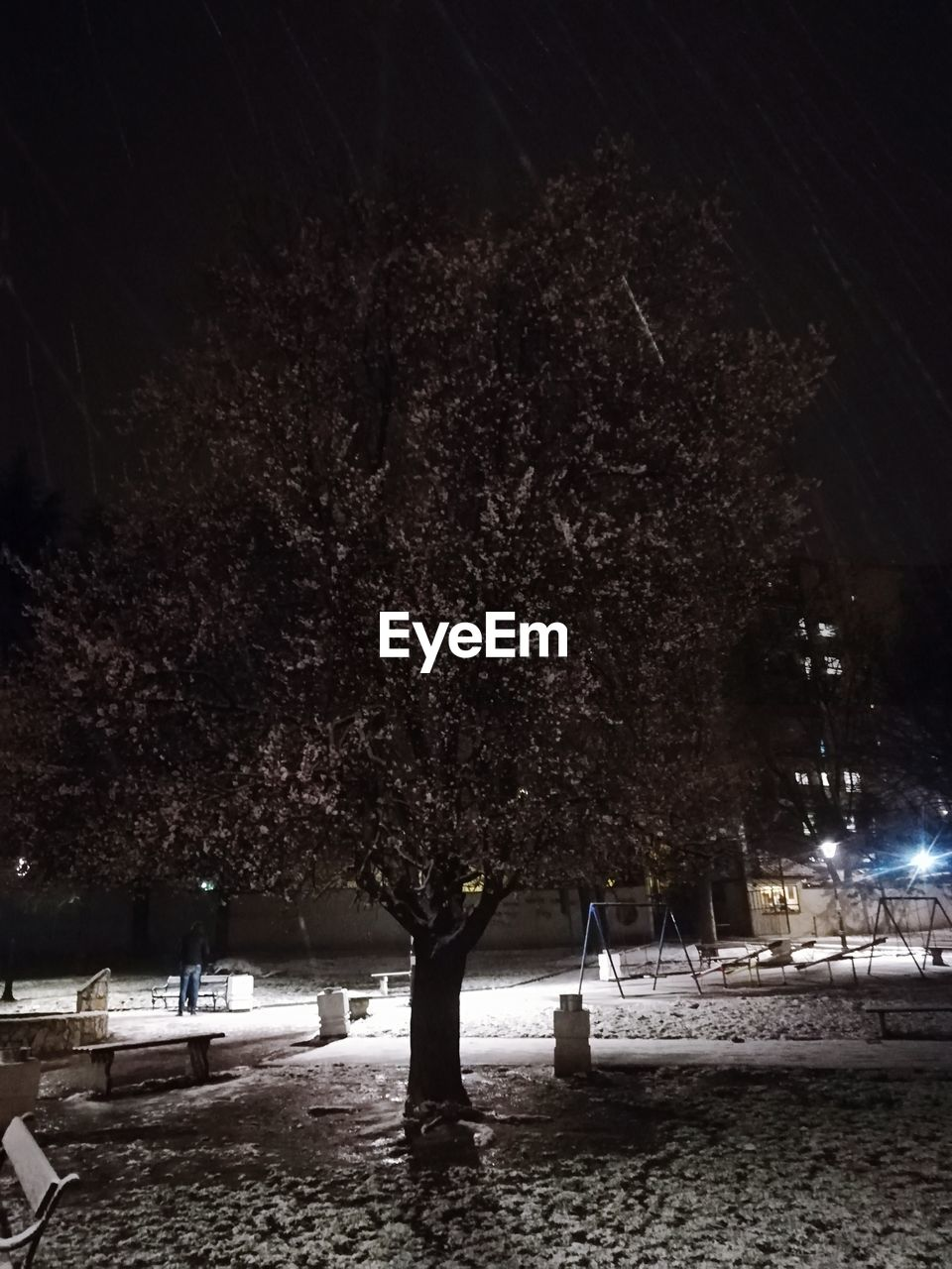 tree, plant, night, illuminated, nature, outdoors, land, no people, park, architecture, growth, beauty in nature, lighting equipment, field, park - man made space, snow, built structure, dark, street