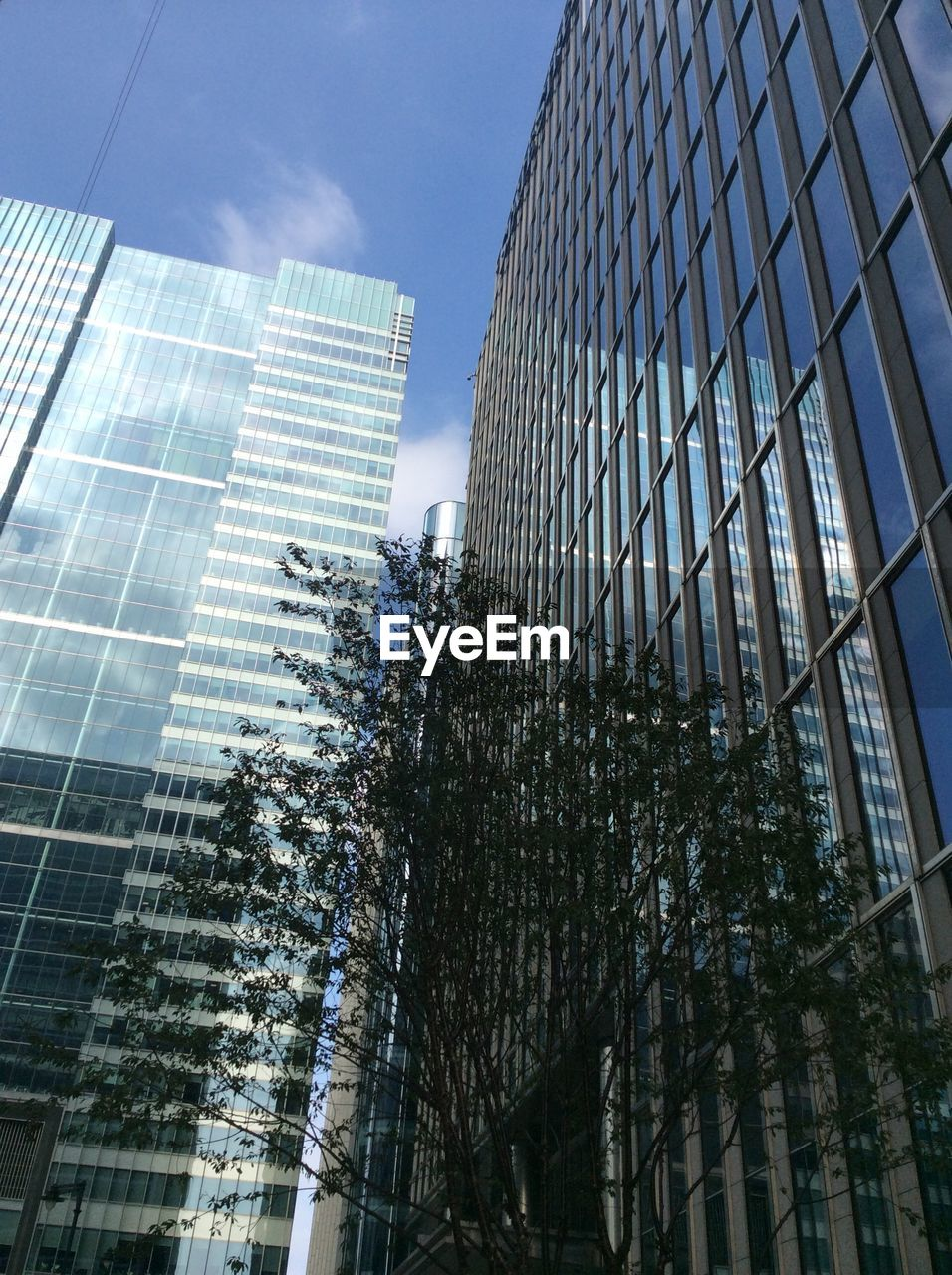 Low angle view of tree and modern buildings