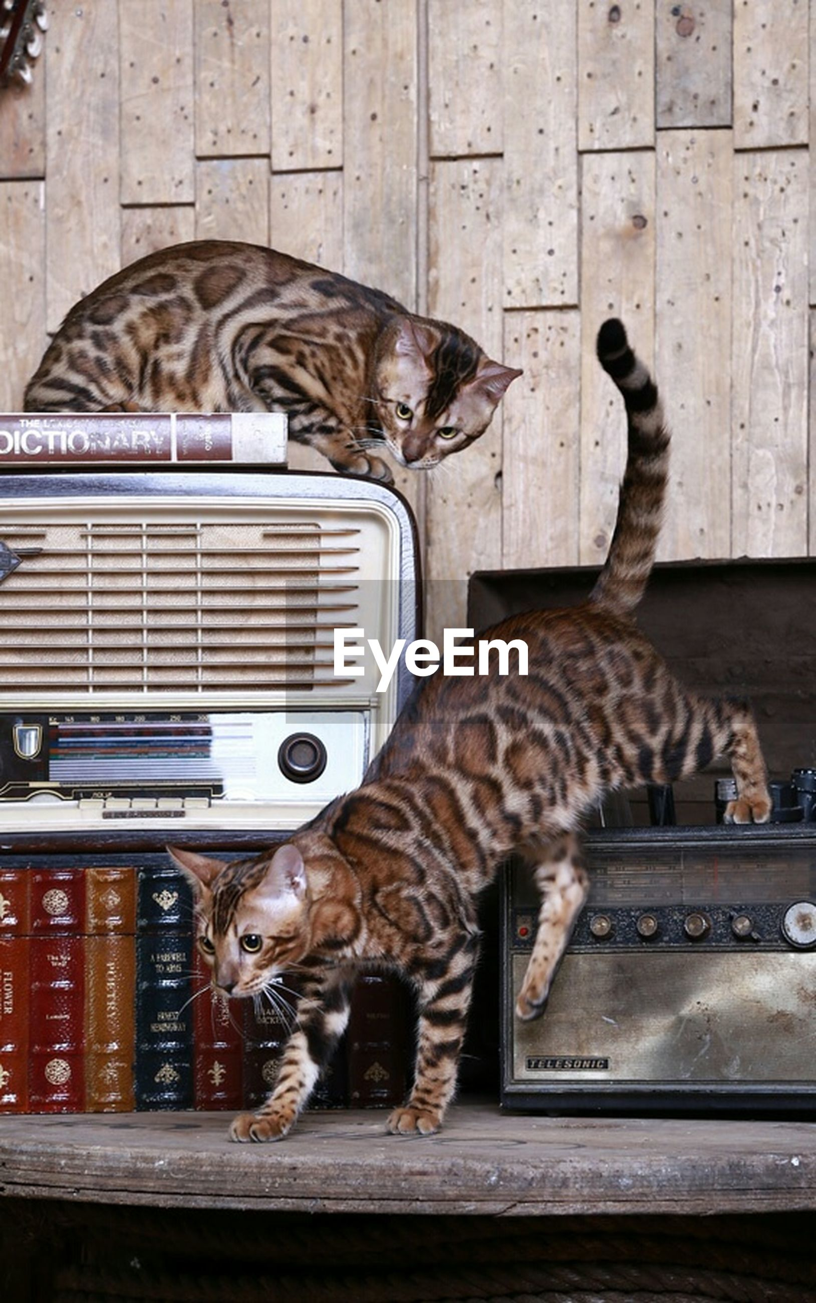 animal themes, domestic animals, mammal, one animal, pets, two animals, cat, feline, domestic cat, building exterior, built structure, relaxation, indoors, architecture, no people, full length, zoology, day, side view