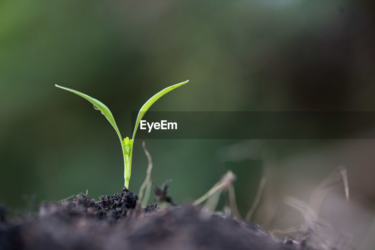 growth, plant, green color, beginnings, selective focus, new life, leaf, plant part, seedling, nature, beauty in nature, close-up, no people, day, vulnerability, dirt, fragility, sapling, outdoors, field, small