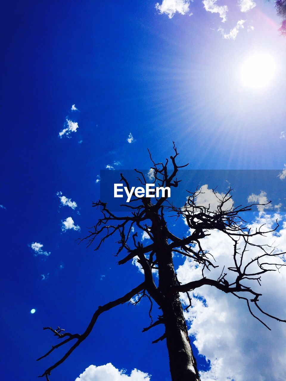 sun, sunlight, tree, sunbeam, beauty in nature, nature, low angle view, sky, branch, day, no people, tranquility, blue, outdoors, growth, bare tree