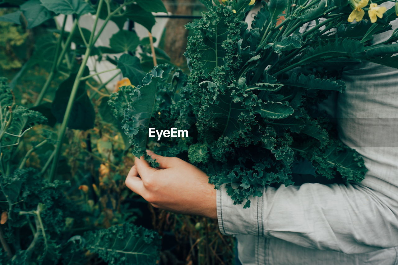Midsection Of Person Holding Kale In Garden