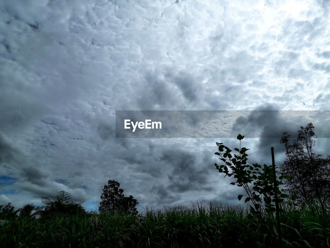 cloud - sky, plant, sky, beauty in nature, tree, scenics - nature, nature, no people, tranquility, tranquil scene, storm, non-urban scene, land, overcast, day, storm cloud, growth, outdoors, environment, power in nature, ominous