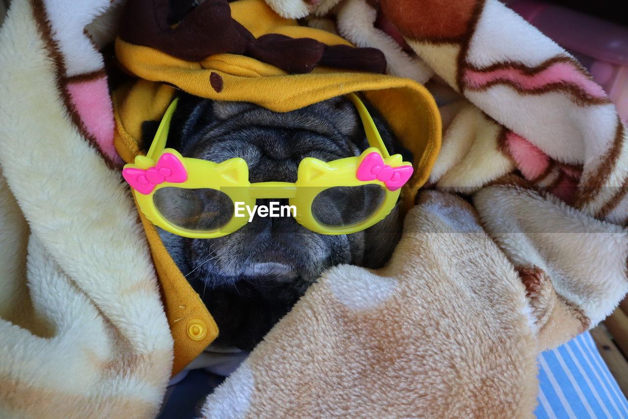 mammal, domestic animals, pets, domestic, animal, toy, animal themes, close-up, vertebrate, indoors, animal representation, one animal, canine, bed, stuffed toy, love, dog, no people, representation, yellow, softness