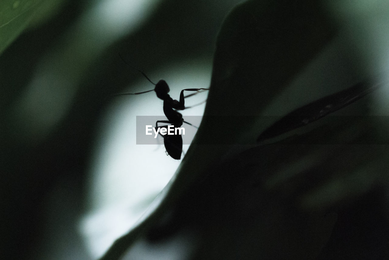 Silhouette Ant In Darkroom