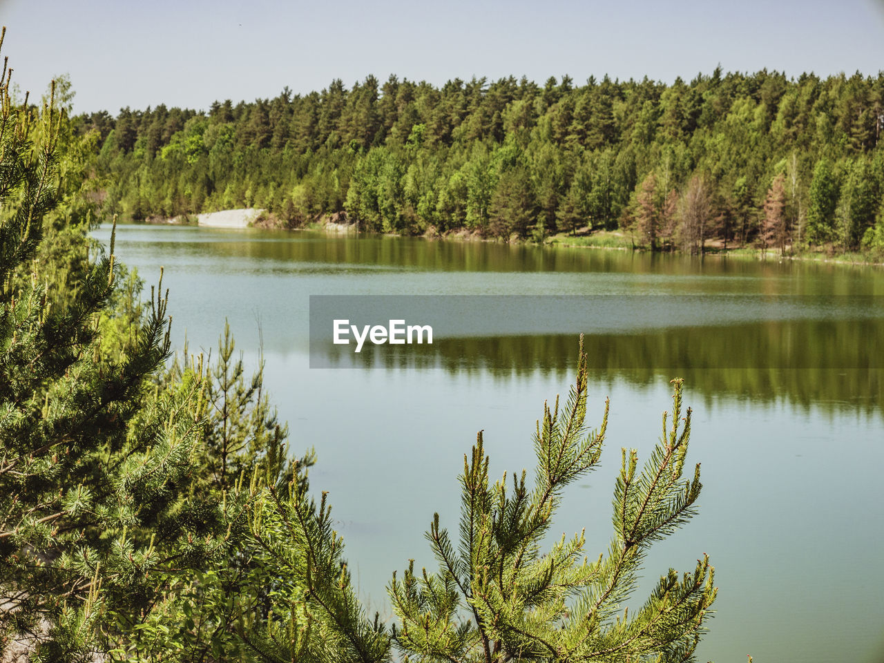 tree, plant, water, lake, tranquil scene, tranquility, beauty in nature, reflection, scenics - nature, green color, growth, no people, nature, day, non-urban scene, sky, idyllic, forest, outdoors