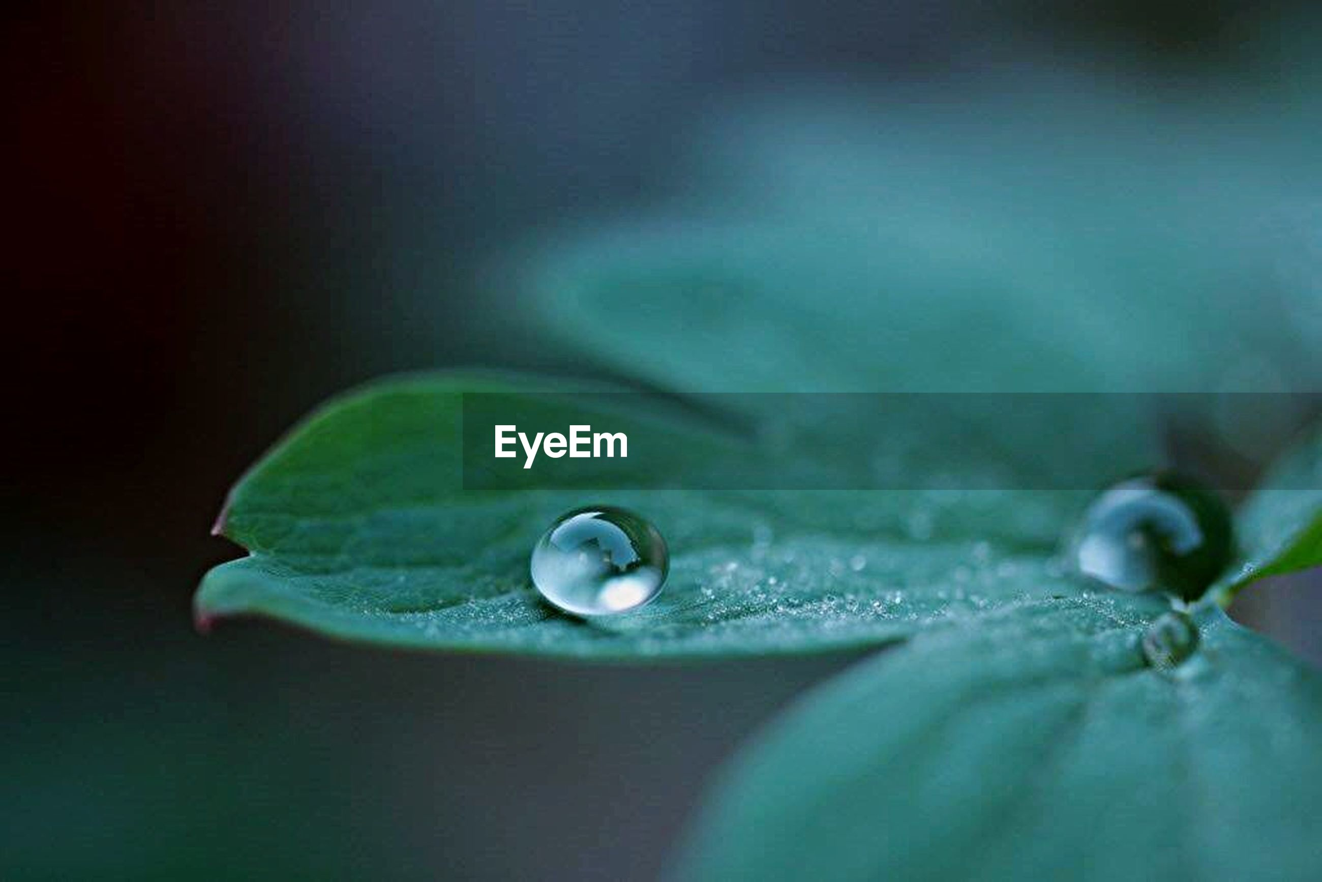 water, drop, close-up, wet, green color, leaf, selective focus, freshness, fragility, nature, purity, focus on foreground, water drop, beauty in nature, droplet, dew, no people, detail, plant, raindrop