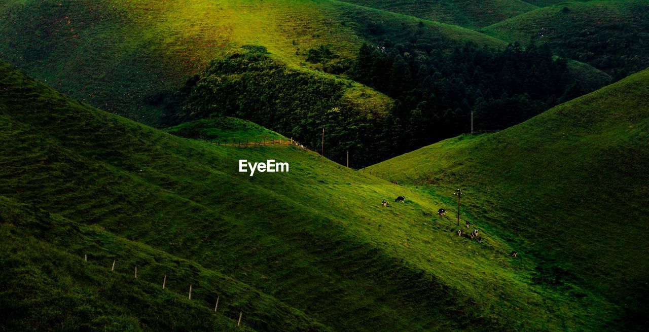 Scenic View Of Green Landscape