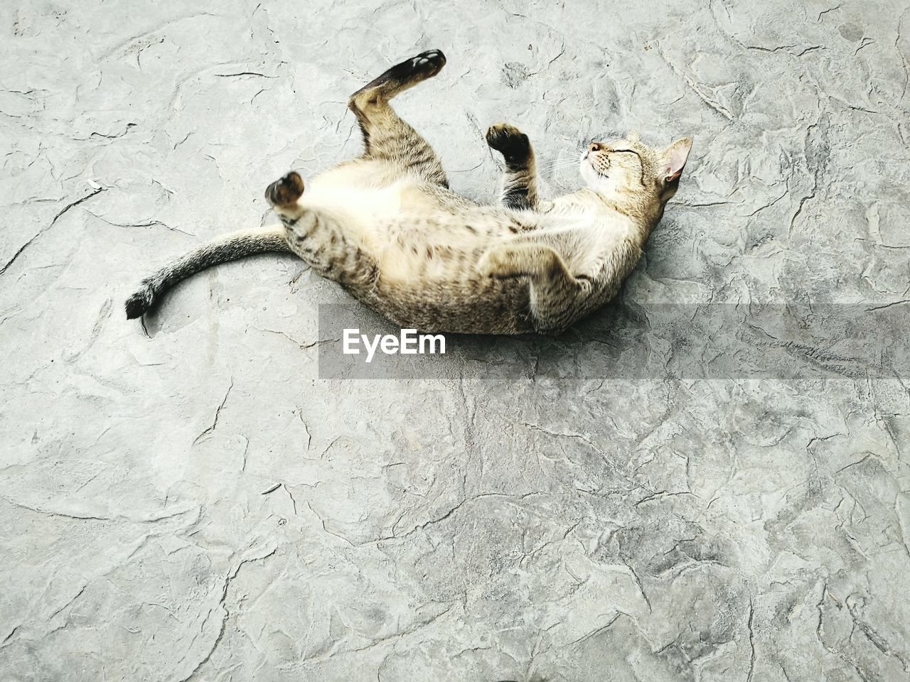 High Angle View Of Cat Lying Down Outdoors