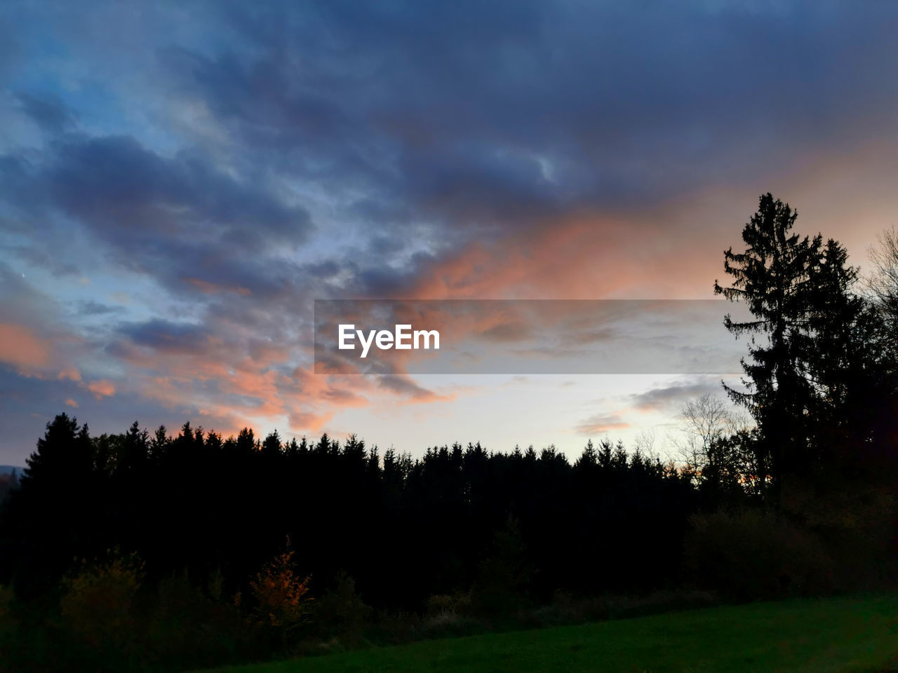 tree, sky, cloud - sky, beauty in nature, tranquil scene, sunset, scenics - nature, tranquility, plant, non-urban scene, no people, silhouette, land, nature, environment, landscape, orange color, growth, idyllic, field, outdoors, coniferous tree