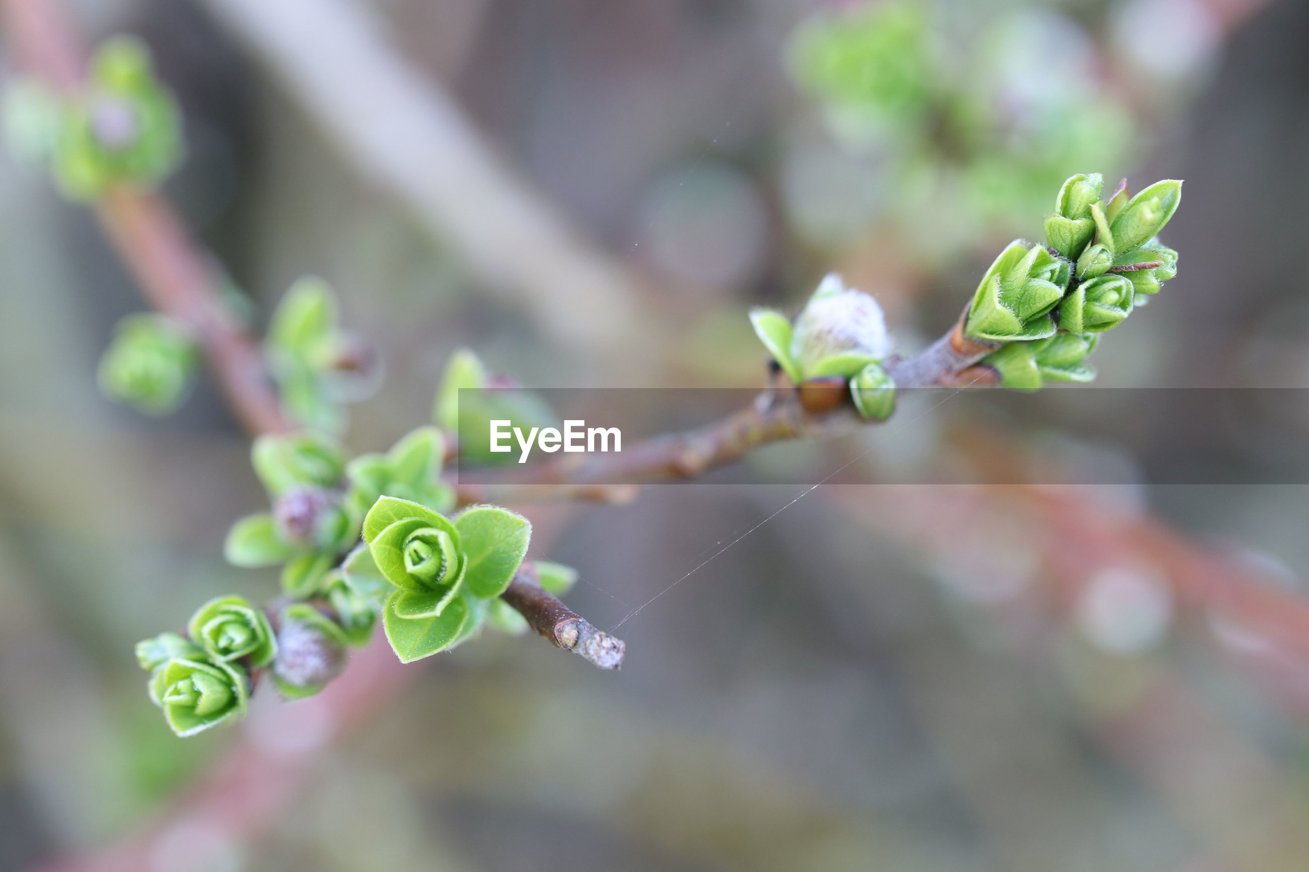 CLOSE-UP OF GREEN PLANT WITH BUDS