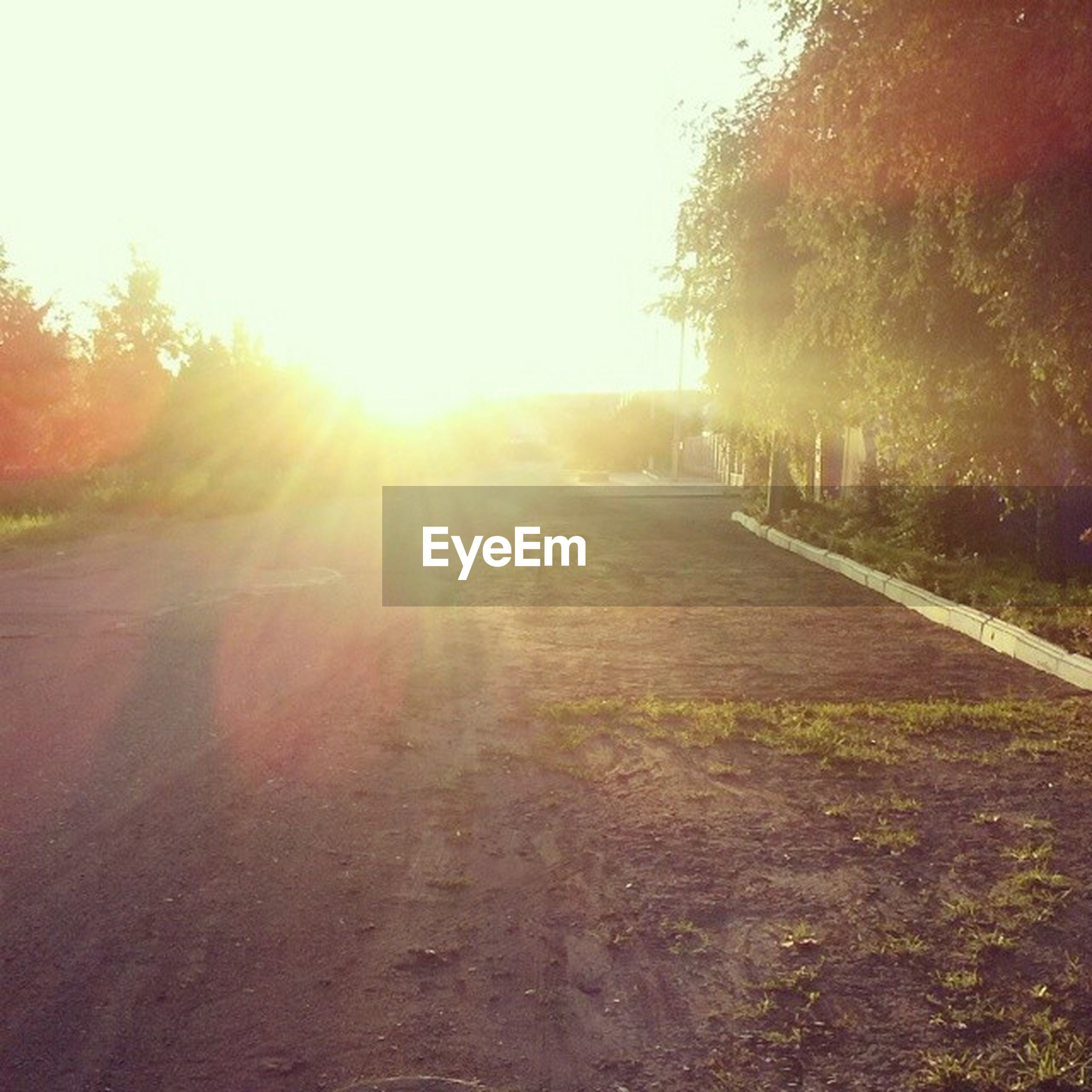 sun, tree, transportation, the way forward, clear sky, sunlight, sunset, road, sunbeam, lens flare, diminishing perspective, nature, vanishing point, tranquility, street, sky, tranquil scene, landscape, outdoors, field