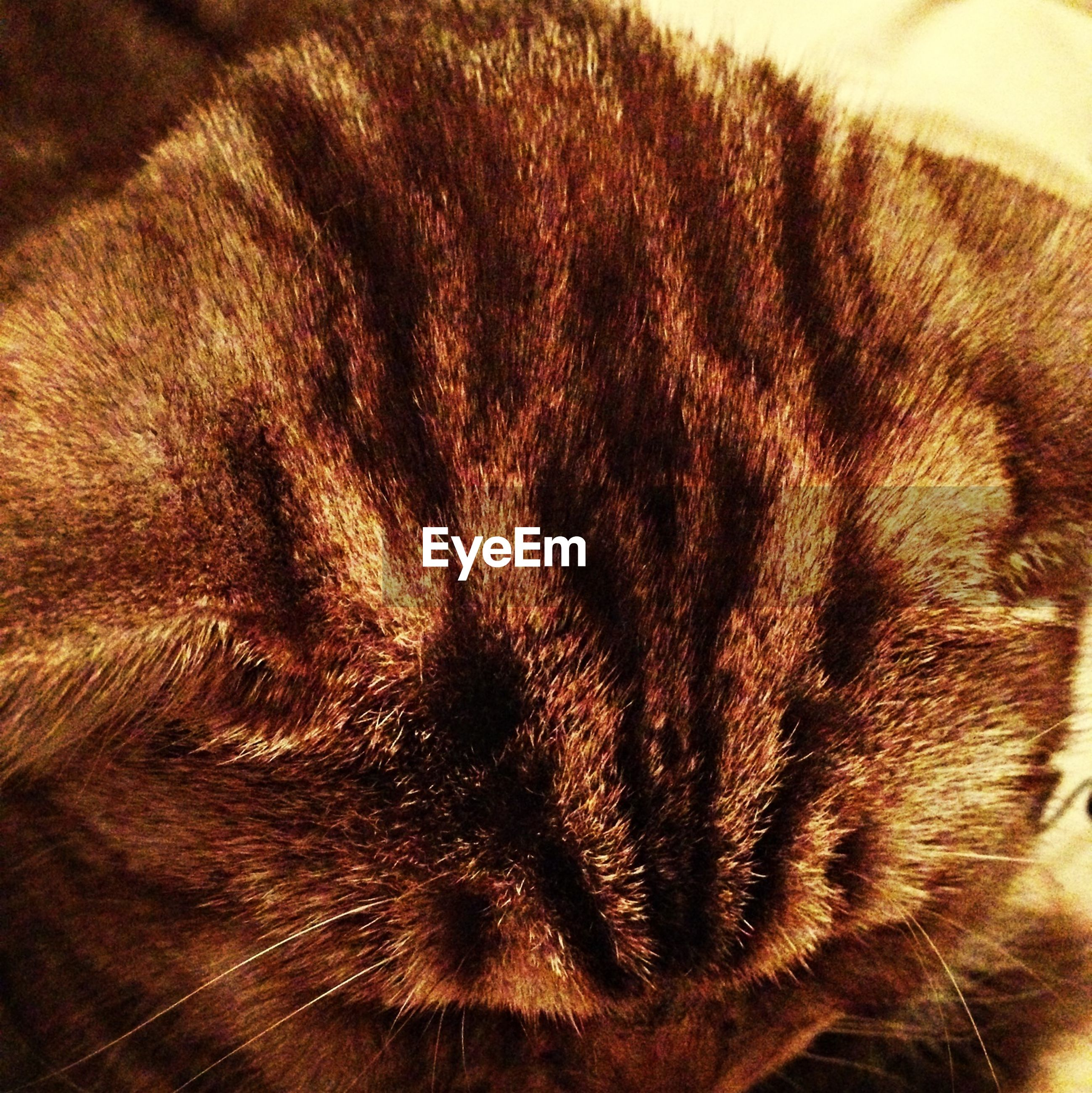 animal themes, one animal, mammal, domestic animals, domestic cat, pets, cat, feline, whisker, indoors, close-up, animal head, animal body part, sleeping, relaxation, no people, eyes closed, part of, brown, zoology