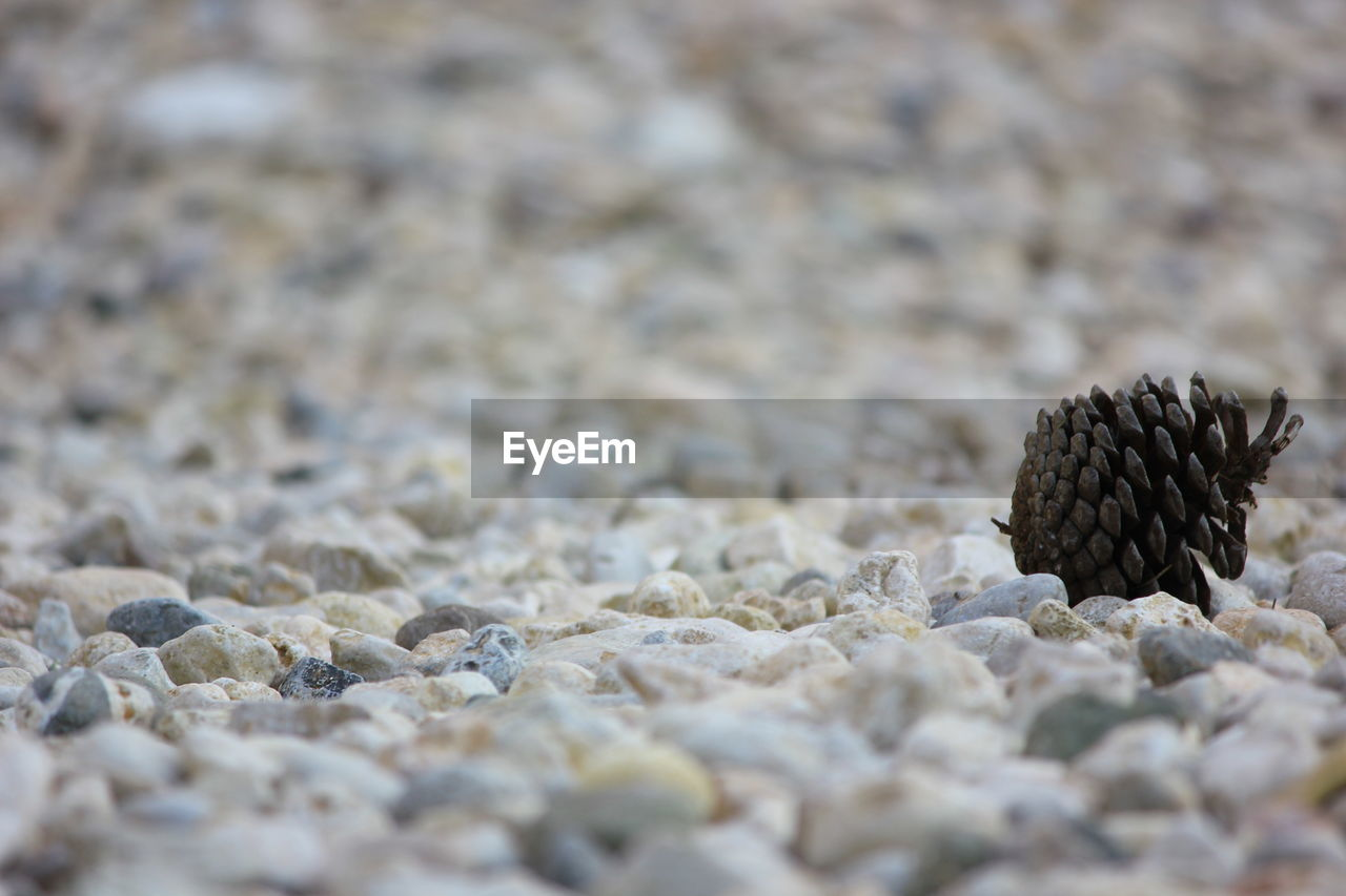 beach, selective focus, textured, day, pebble, no people, outdoors, sand, nature, close-up, animal themes