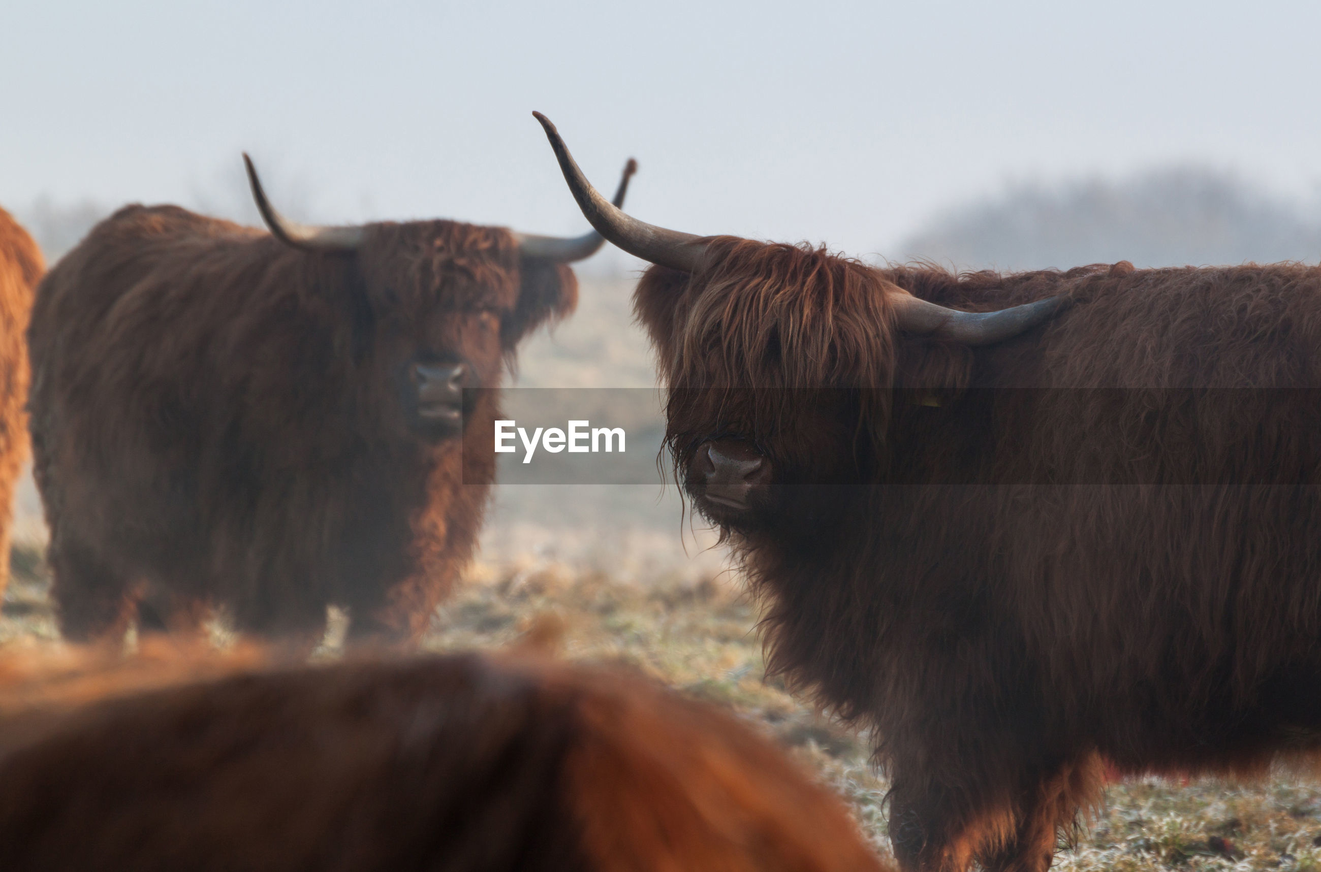 Close-up of cattle against sky