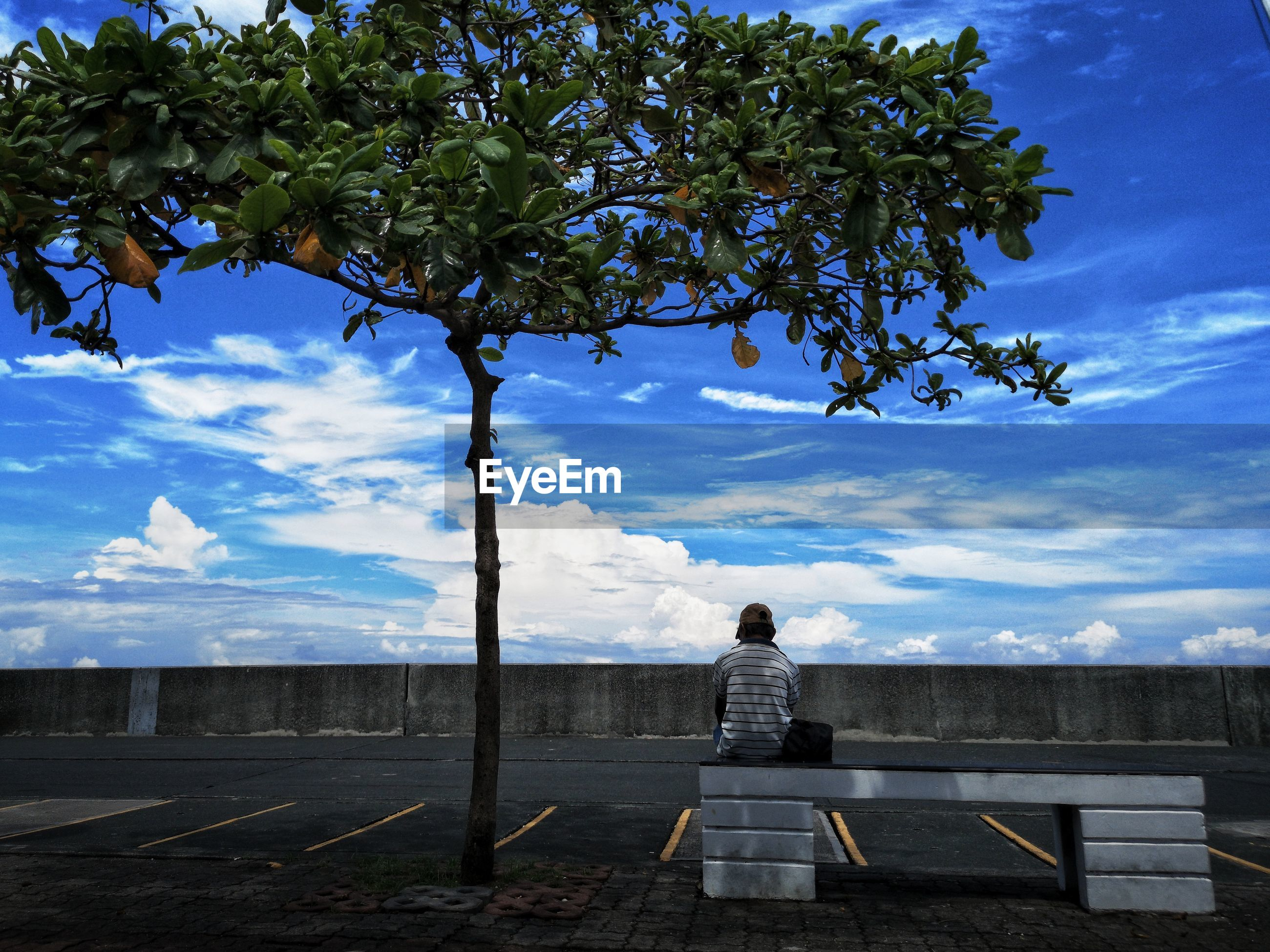 REAR VIEW OF WOMAN LOOKING AT VIEW OF TREE