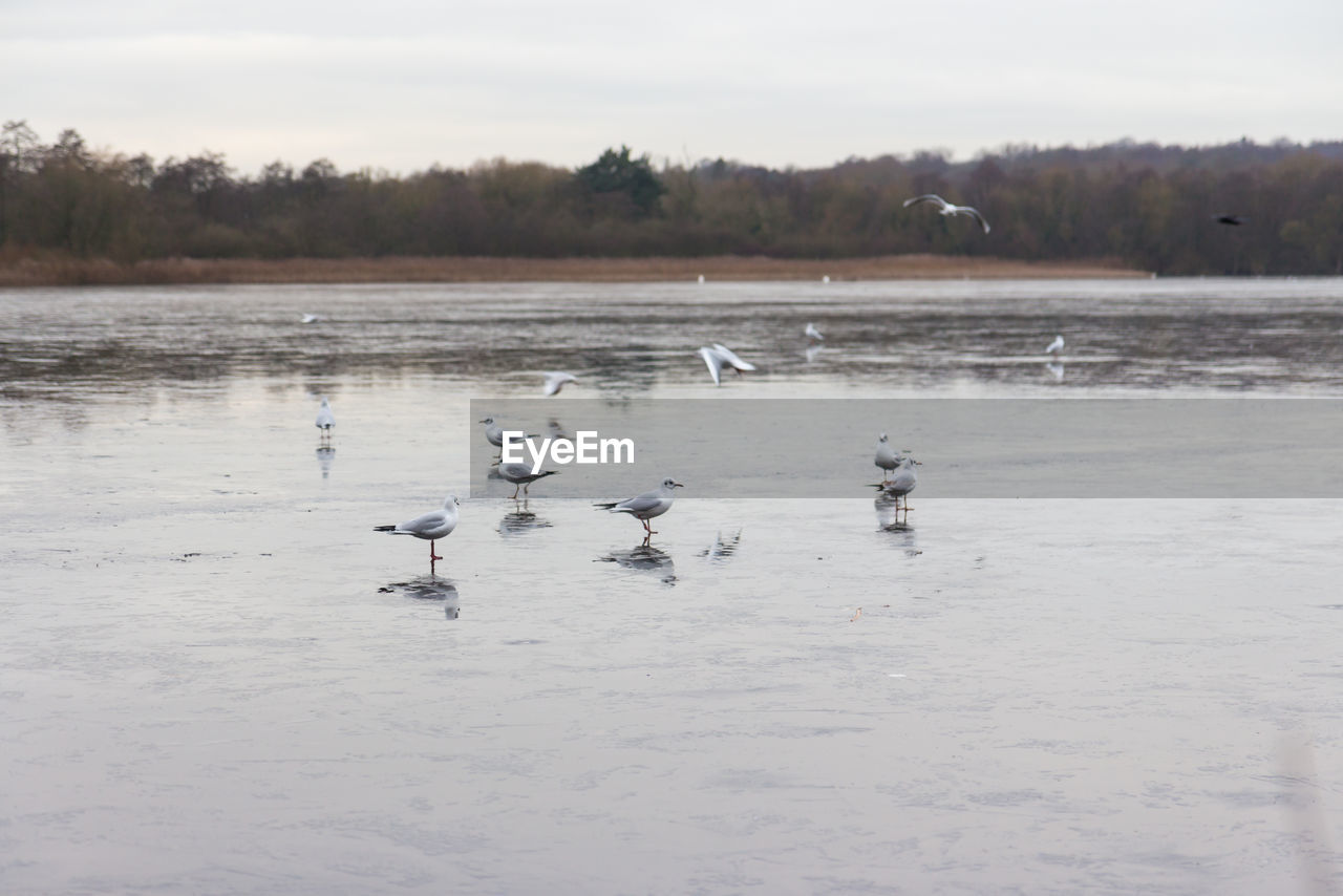 animals in the wild, group of animals, animal wildlife, vertebrate, bird, animal themes, animal, water, large group of animals, lake, nature, day, beauty in nature, sky, waterfront, no people, cold temperature, winter, flock of birds