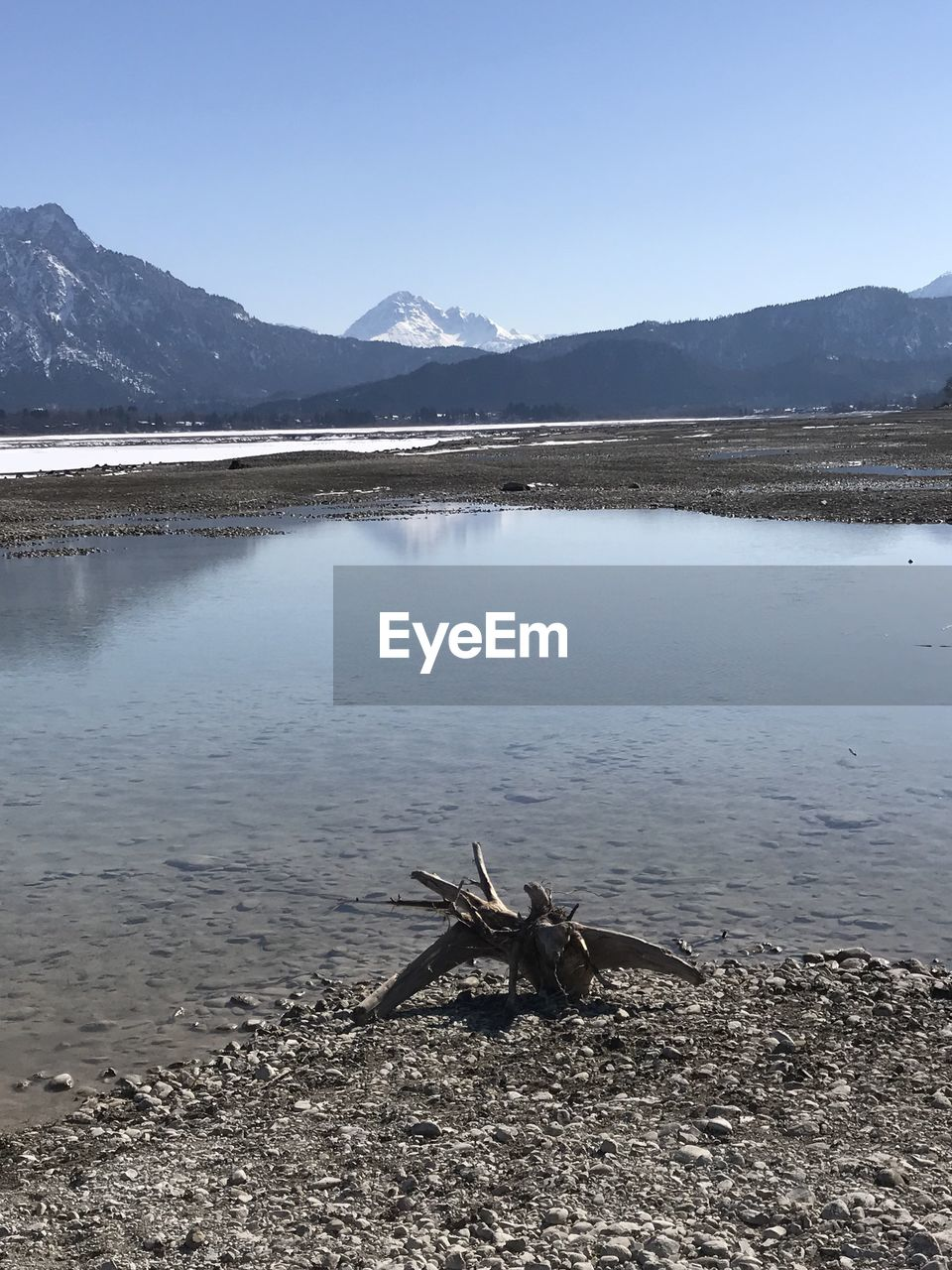water, mountain, tranquil scene, lake, sky, scenics - nature, beauty in nature, nature, tranquility, day, no people, non-urban scene, one animal, animal themes, mountain range, animal, animal wildlife, animals in the wild, outdoors, driftwood