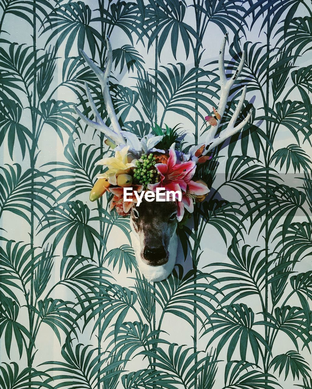 flower, plant, flowering plant, indoors, nature, pattern, plant part, freshness, leaf, vulnerability, no people, fragility, green color, beauty in nature, directly above, wall - building feature, potted plant, animal themes, floral pattern, growth, flower head, flower arrangement