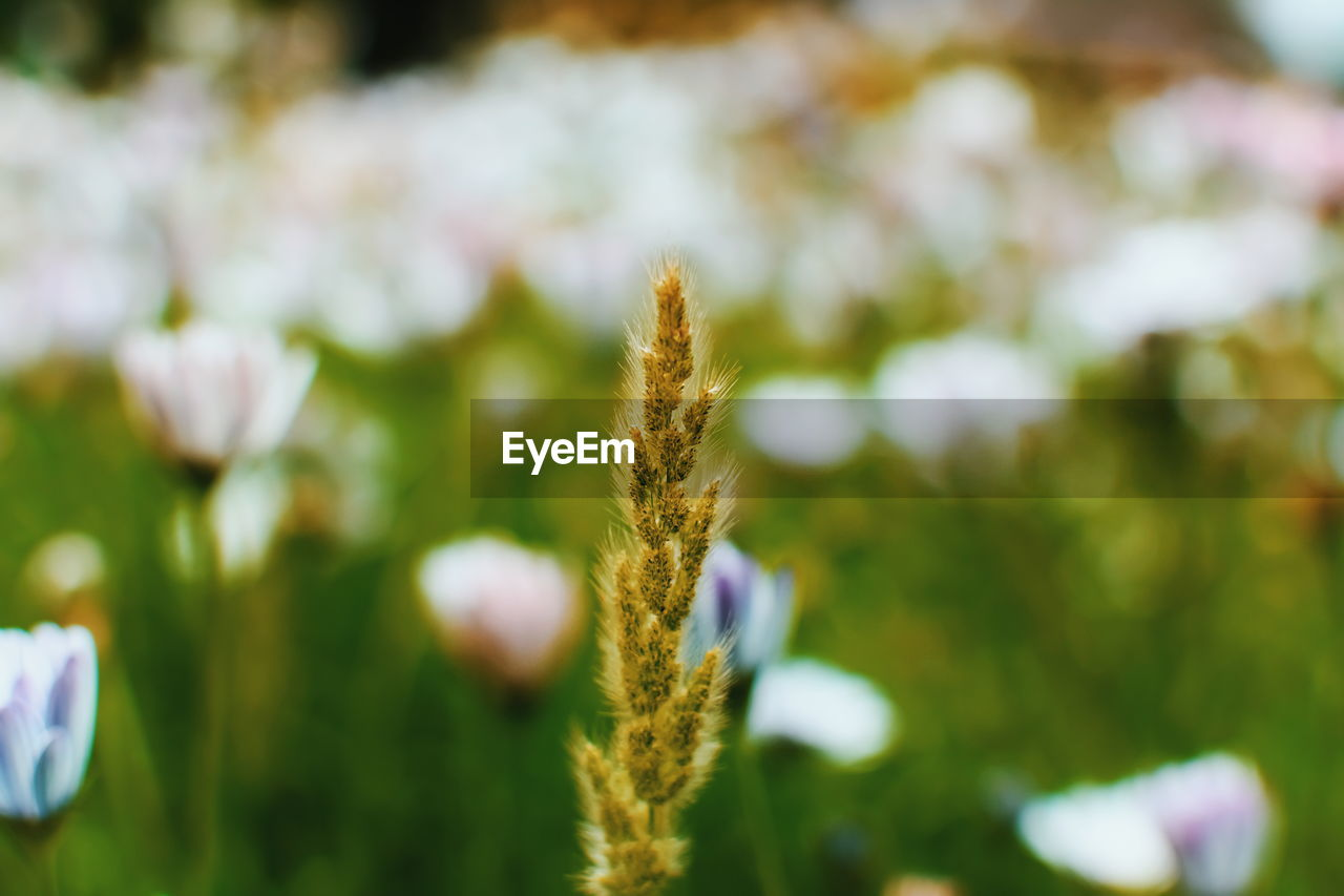 plant, growth, beauty in nature, close-up, focus on foreground, flower, no people, vulnerability, nature, fragility, day, flowering plant, freshness, tranquility, selective focus, field, outdoors, green color, land, plant stem, flower head