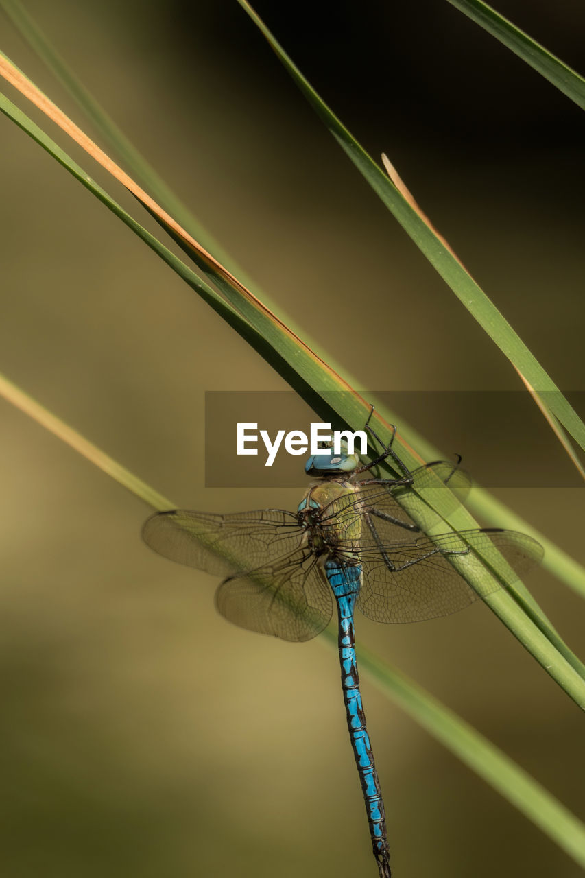 one animal, animal themes, insect, animals in the wild, animal wildlife, damselfly, focus on foreground, outdoors, no people, day, nature, close-up