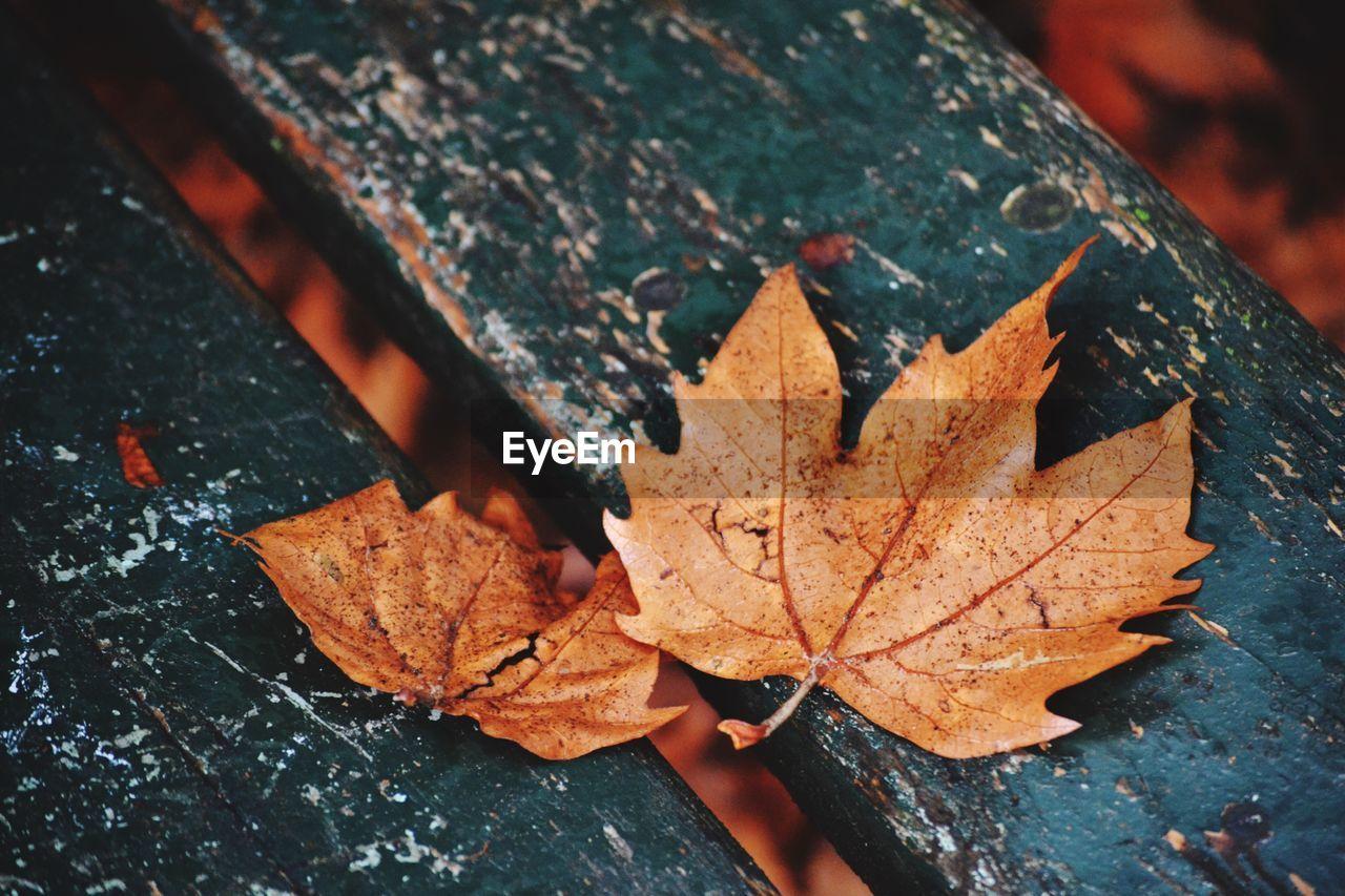 Close-Up Of Dry Leaf On Ground