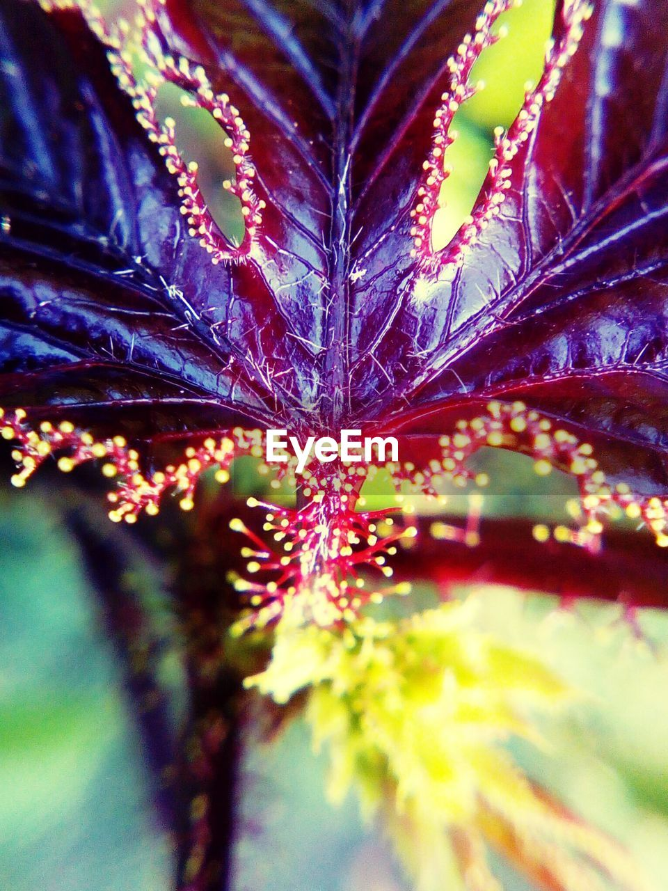 close-up, leaf, nature, growth, no people, selective focus, beauty in nature, day, outdoors, plant, fragility, flower