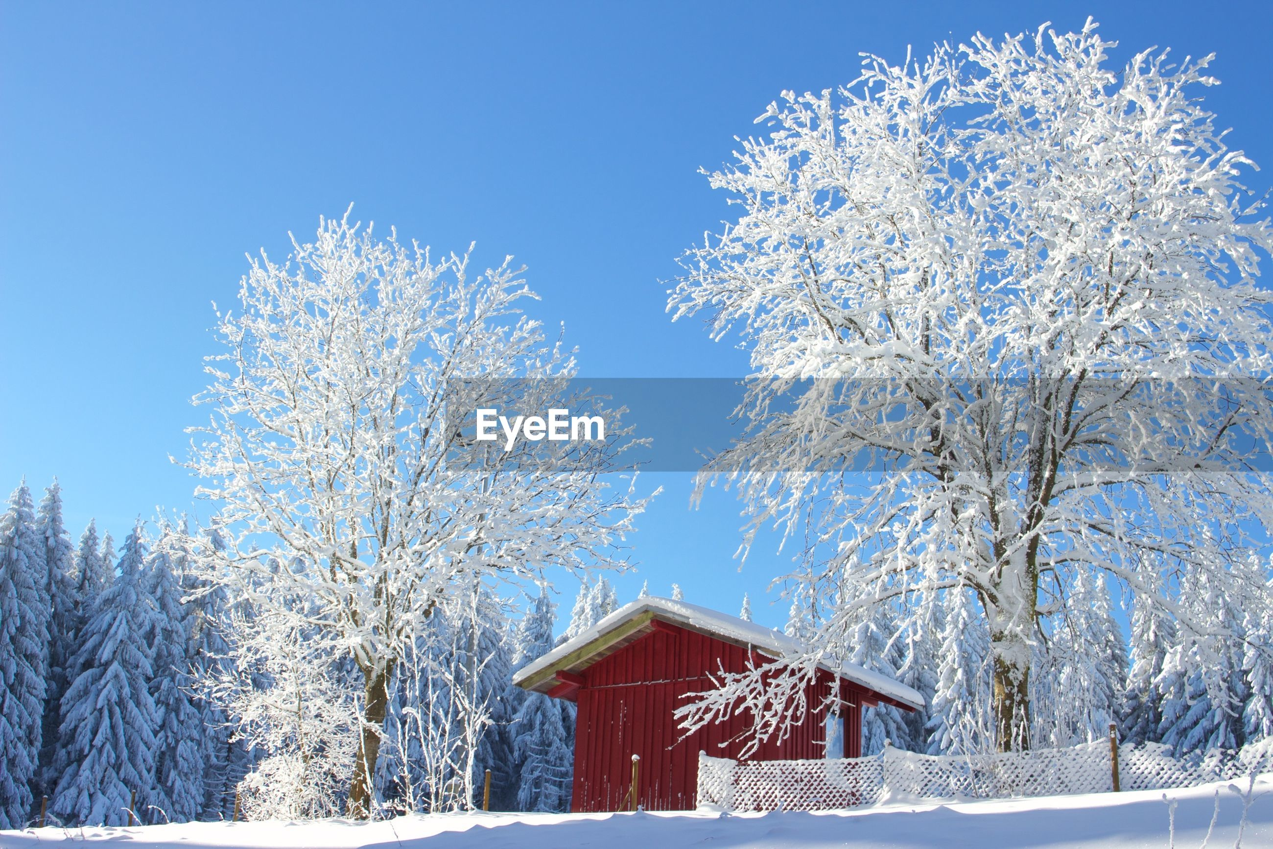 House and trees on snow covered landscape