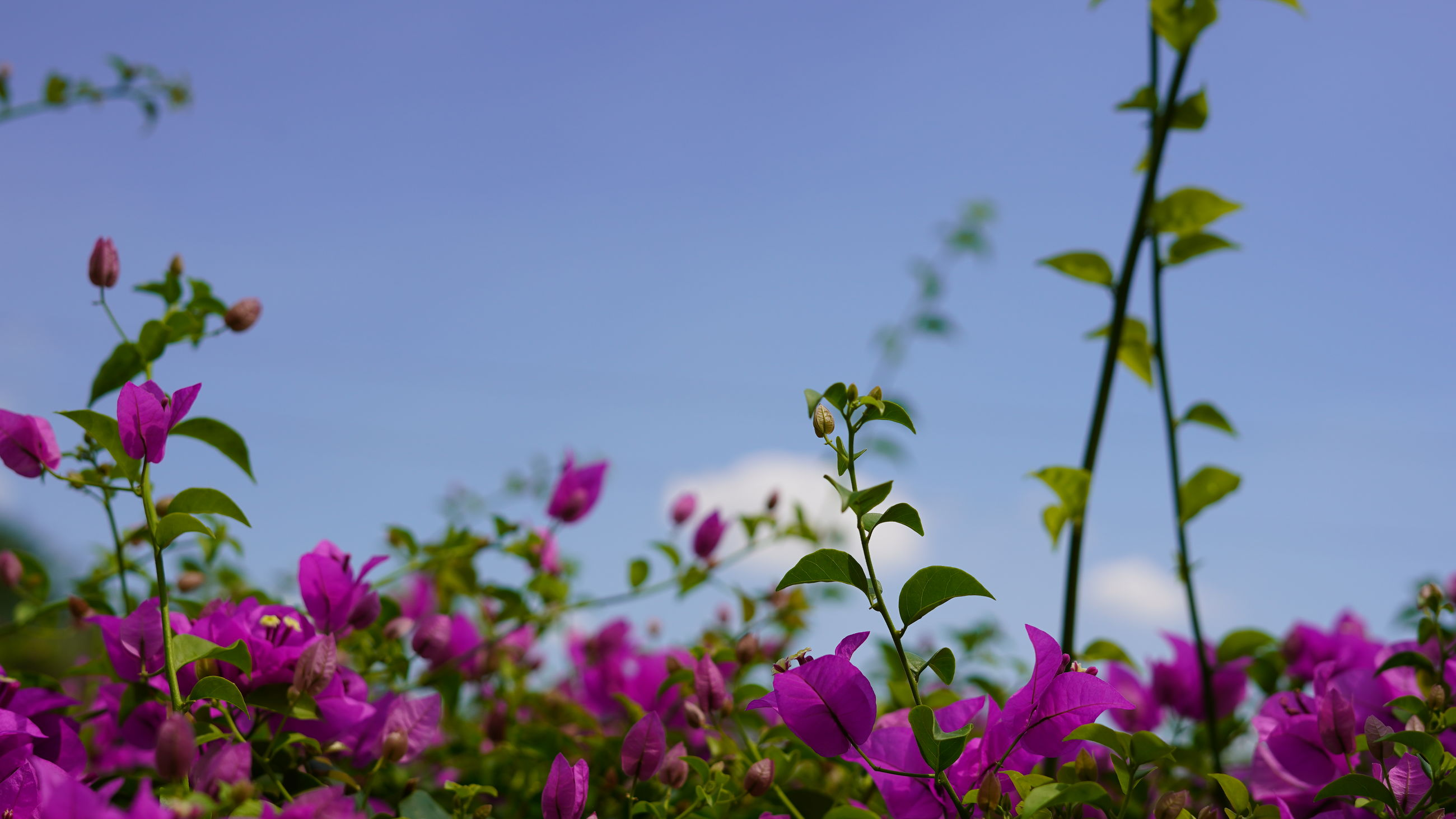 Close-up of pink flowering plants against sky