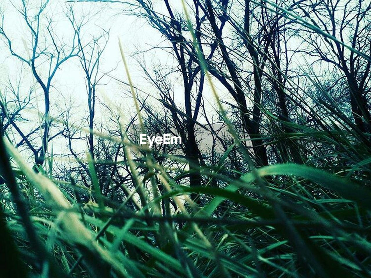 grass, nature, selective focus, growth, tranquility, no people, day, outdoors, tranquil scene, tree, beauty in nature, close-up