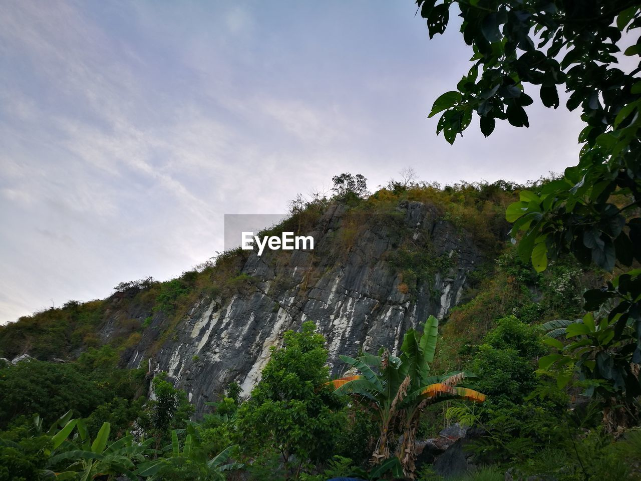 tree, nature, no people, sky, outdoors, mountain, beauty in nature, low angle view, scenics, day