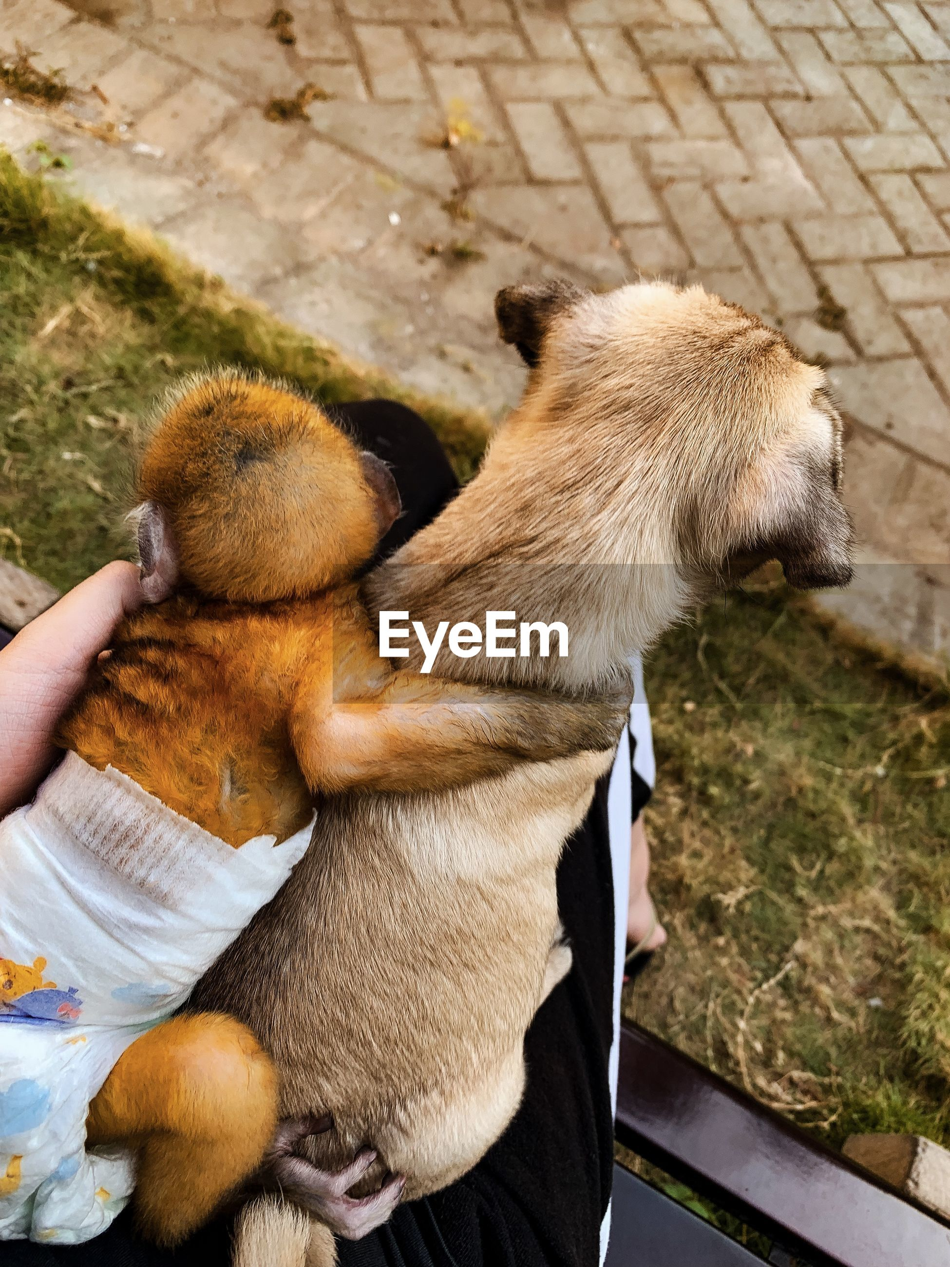 HIGH ANGLE VIEW OF PERSON HOLDING DOG BY HAND