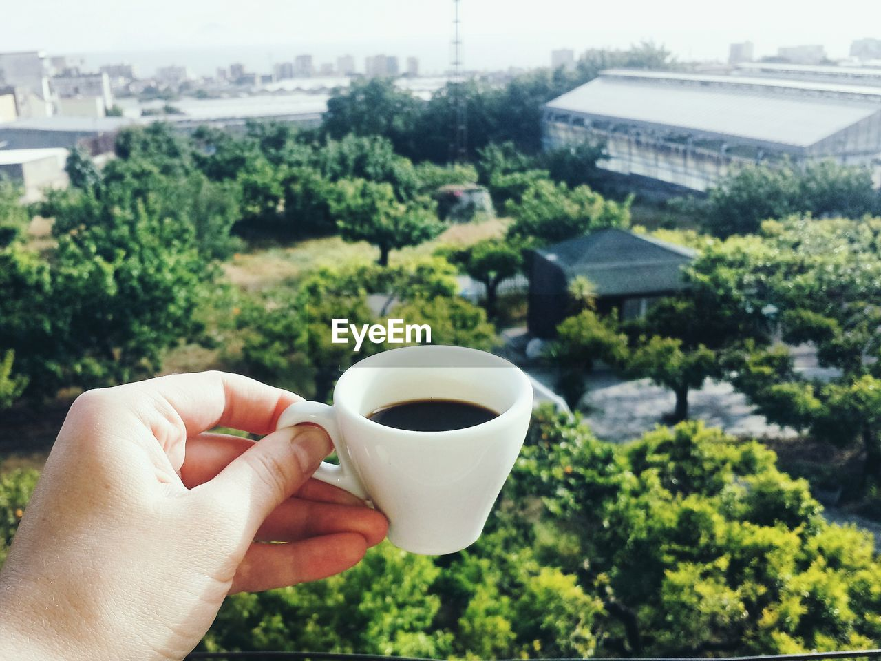 Close-Up Of Human Hand Holding Black Coffee Against Trees