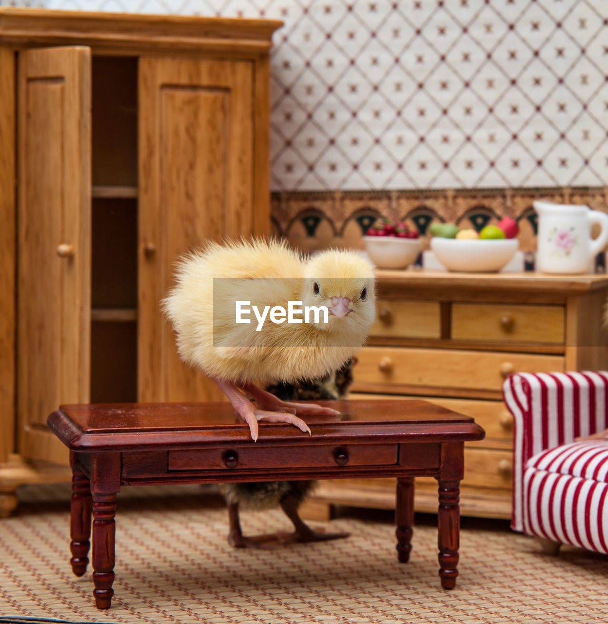 VIEW OF AN ANIMAL ON CHAIR