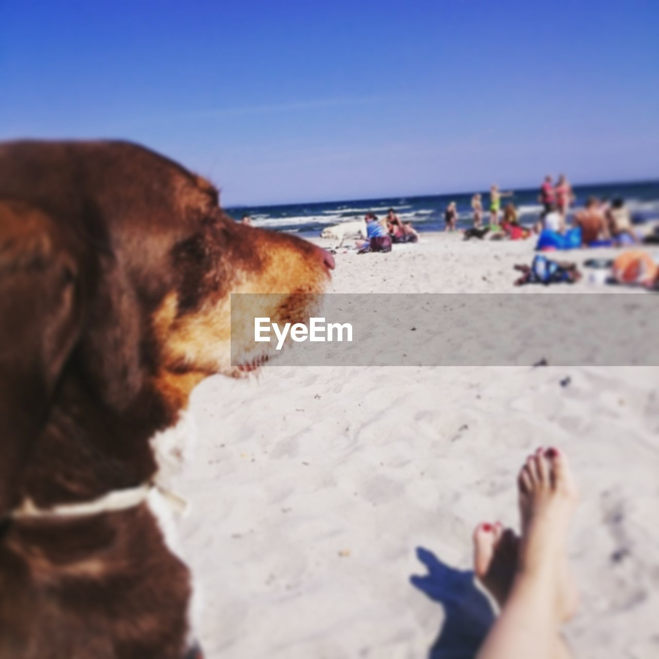 beach, sand, dog, sea, real people, shore, horizon over water, domestic animals, water, pets, barefoot, one animal, animal themes, incidental people, low section, human leg, leisure activity, nature, day, mammal, outdoors, relaxation, one person, summer, sky, clear sky, beauty in nature, close-up, people