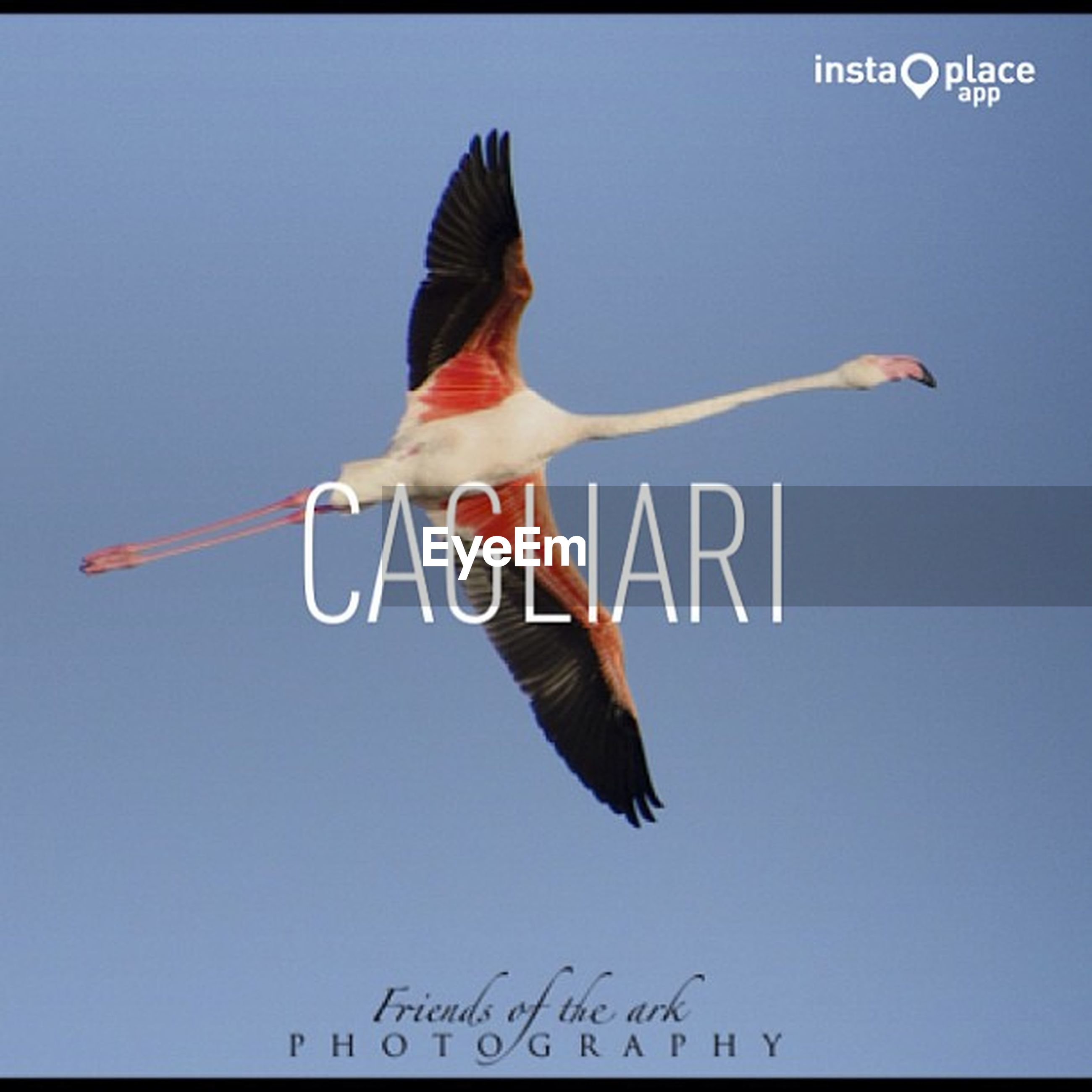 clear sky, low angle view, flying, blue, text, mid-air, bird, communication, western script, copy space, spread wings, freedom, flag, day, animal themes, outdoors, animals in the wild, sky, motion, transportation