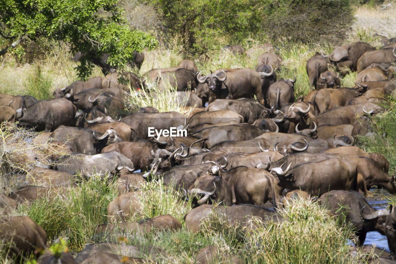 HERD OF SHEEP IN THE ANIMAL