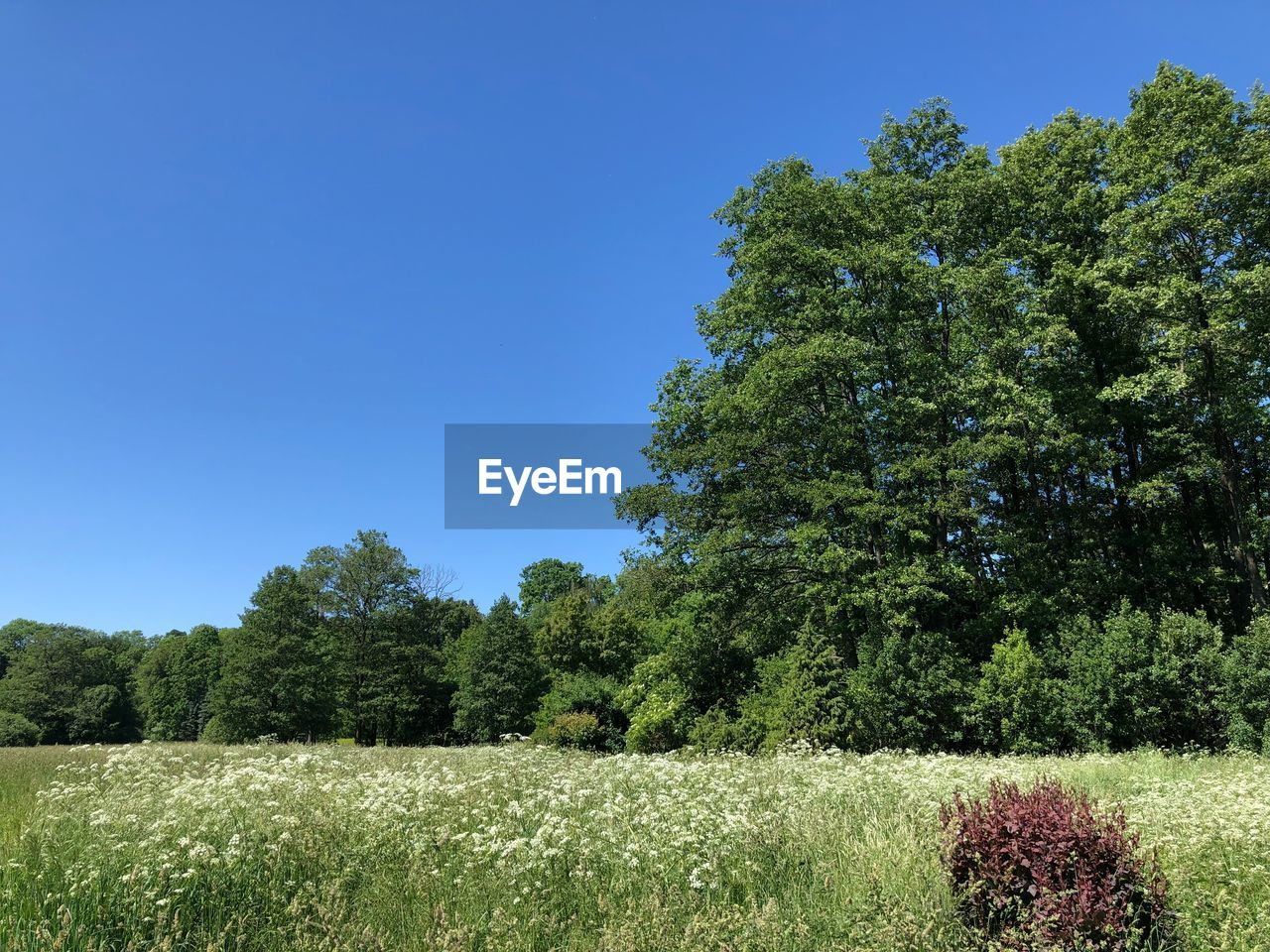 plant, tree, sky, growth, tranquility, beauty in nature, tranquil scene, land, green color, clear sky, blue, field, day, nature, scenics - nature, no people, landscape, grass, environment, sunlight, outdoors