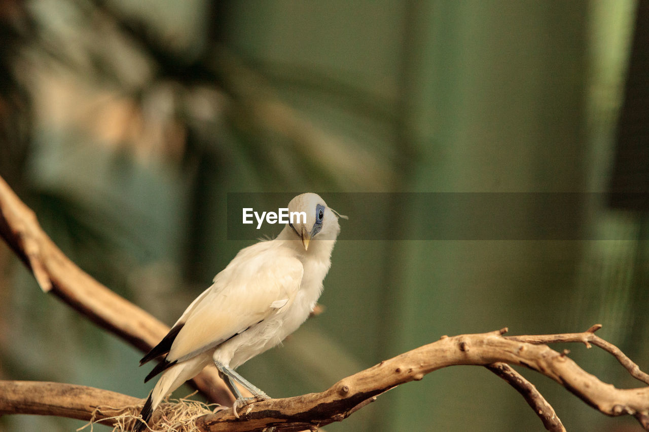 bird, animal themes, animals in the wild, one animal, perching, animal wildlife, focus on foreground, day, nature, no people, branch, outdoors, close-up, beauty in nature