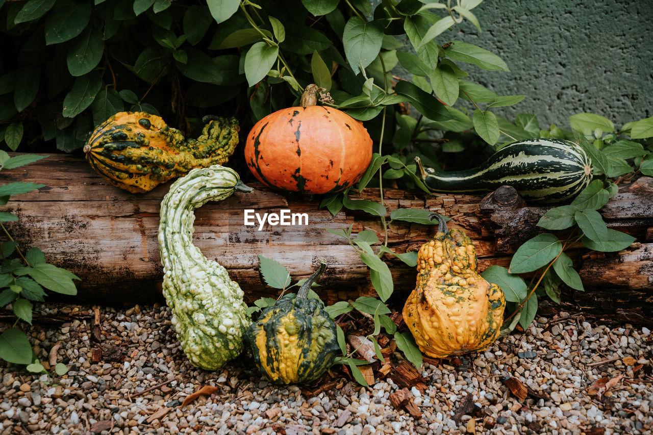 Pumpkins kept on tree trunk outdoors