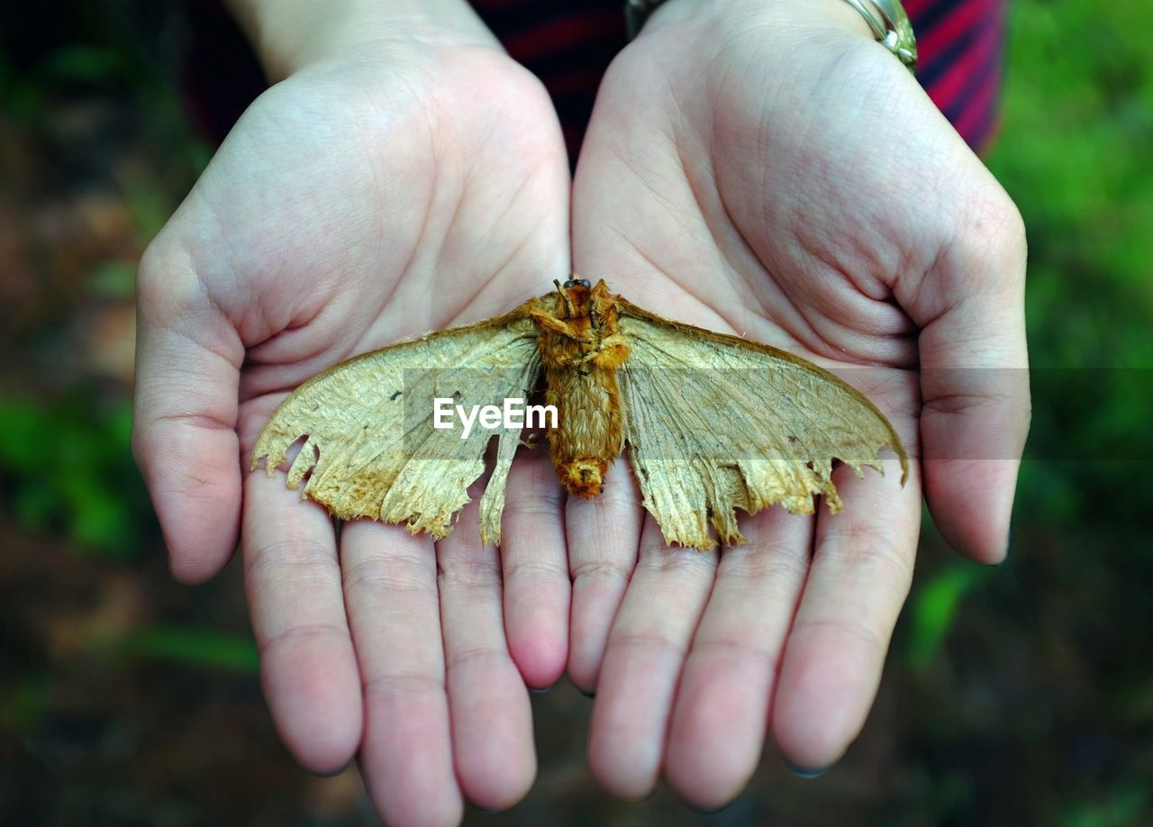 Cropped Image Of Woman Holding Dead Butterfly