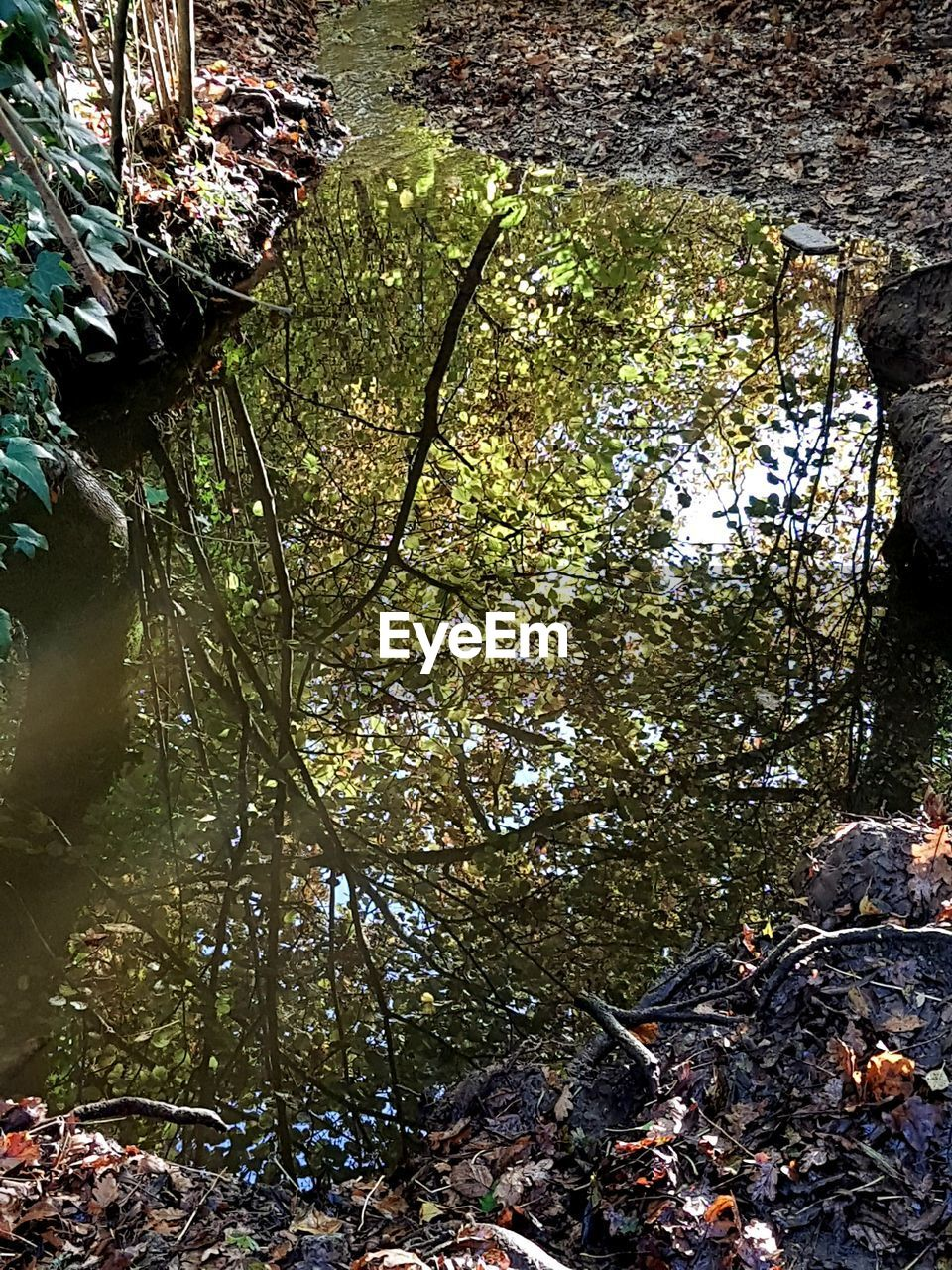nature, leaf, growth, day, tree, no people, outdoors, tranquility, forest, water, beauty in nature, autumn, plant, branch, close-up