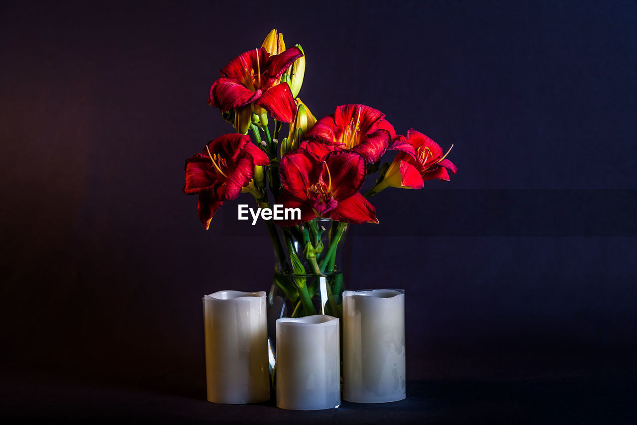 Close-Up Of Red Flowers In Vase Against Black Background
