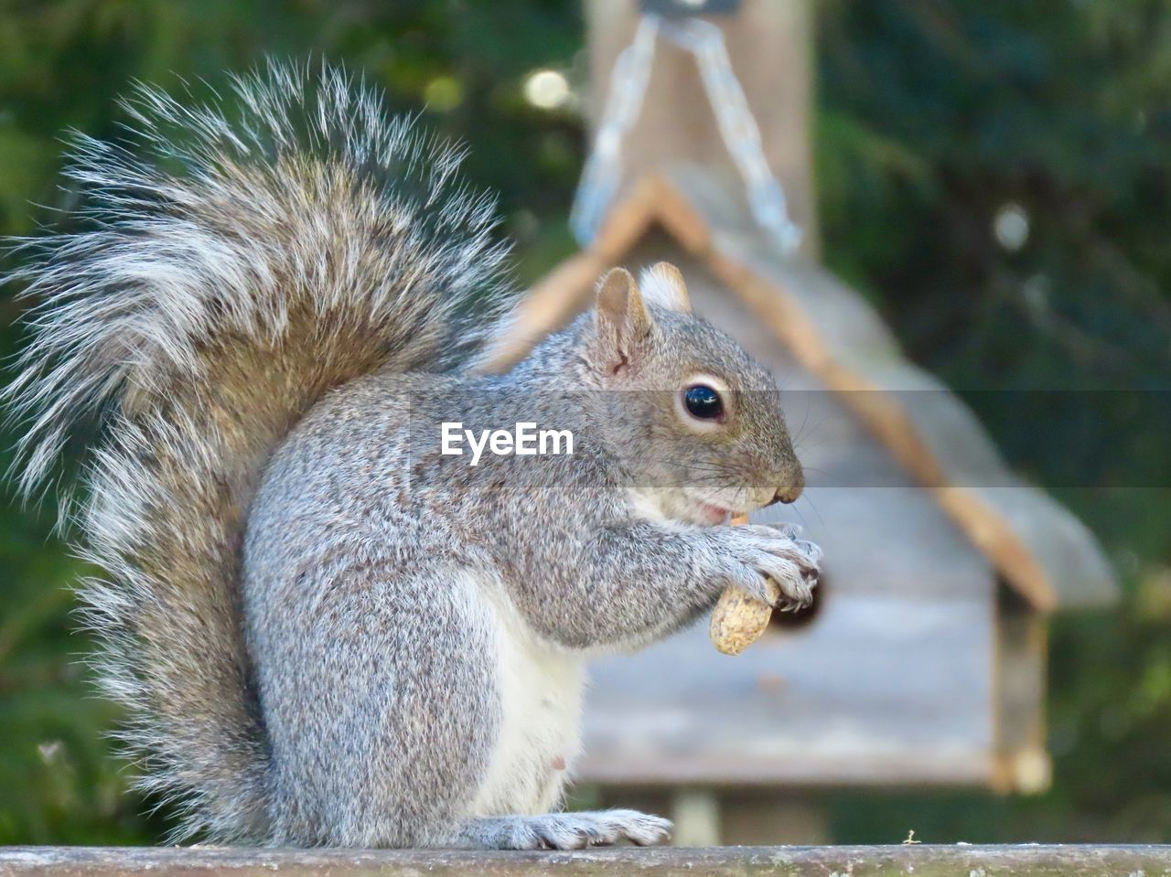 animal, animal themes, rodent, animal wildlife, mammal, squirrel, one animal, animals in the wild, focus on foreground, vertebrate, close-up, no people, day, side view, nature, eating, nut, outdoors, tree, animal body part, whisker, animal head, profile view, herbivorous