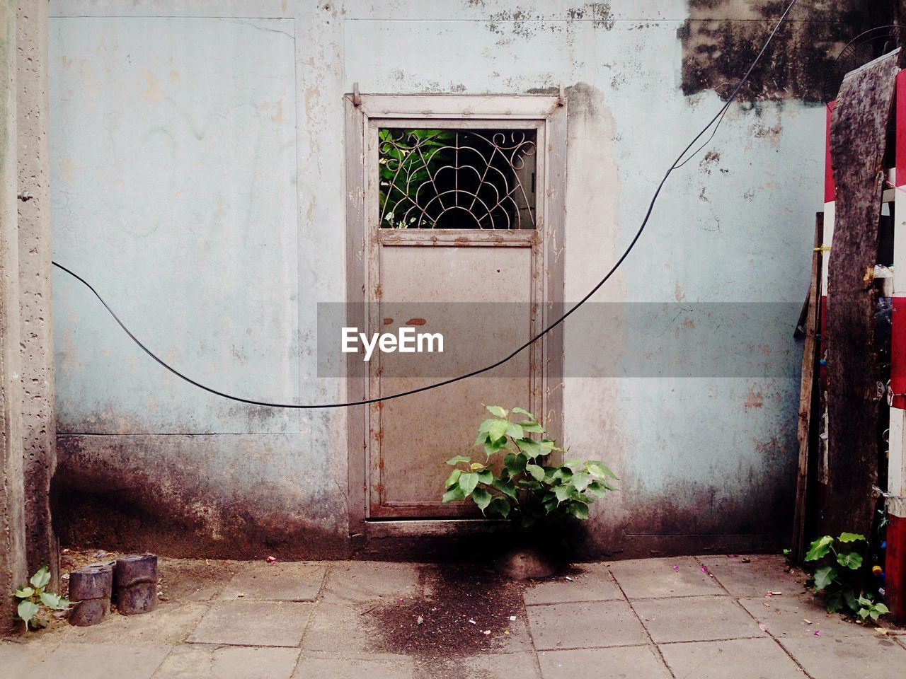 architecture, built structure, building, plant, building exterior, entrance, door, growth, no people, potted plant, nature, window, day, outdoors, wall - building feature, house, flowering plant, flower, ivy, footpath