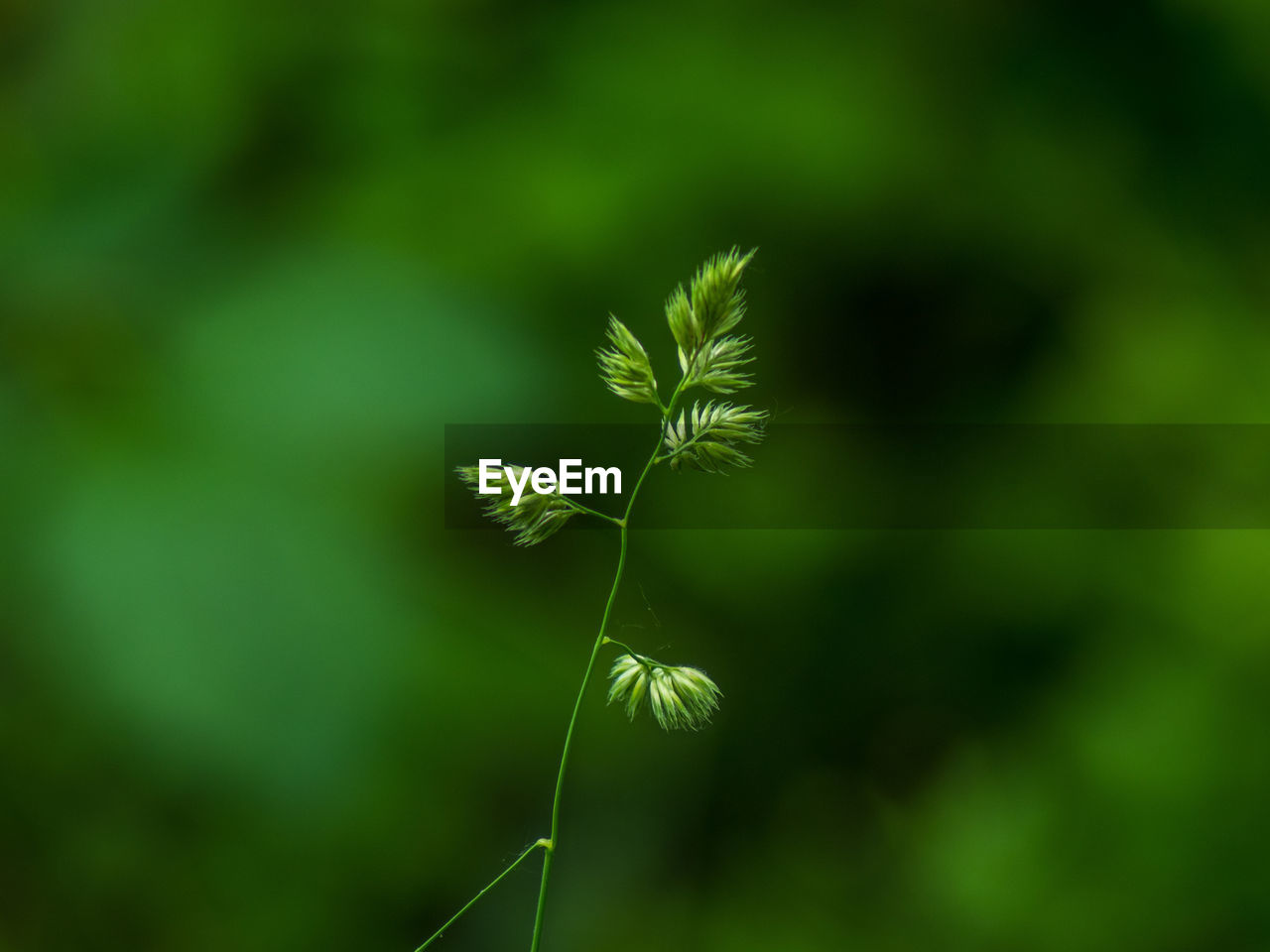 growth, beauty in nature, plant, green color, fragility, focus on foreground, vulnerability, no people, close-up, nature, day, tranquility, selective focus, land, outdoors, freshness, plant stem, flower, field, flowering plant, dandelion seed