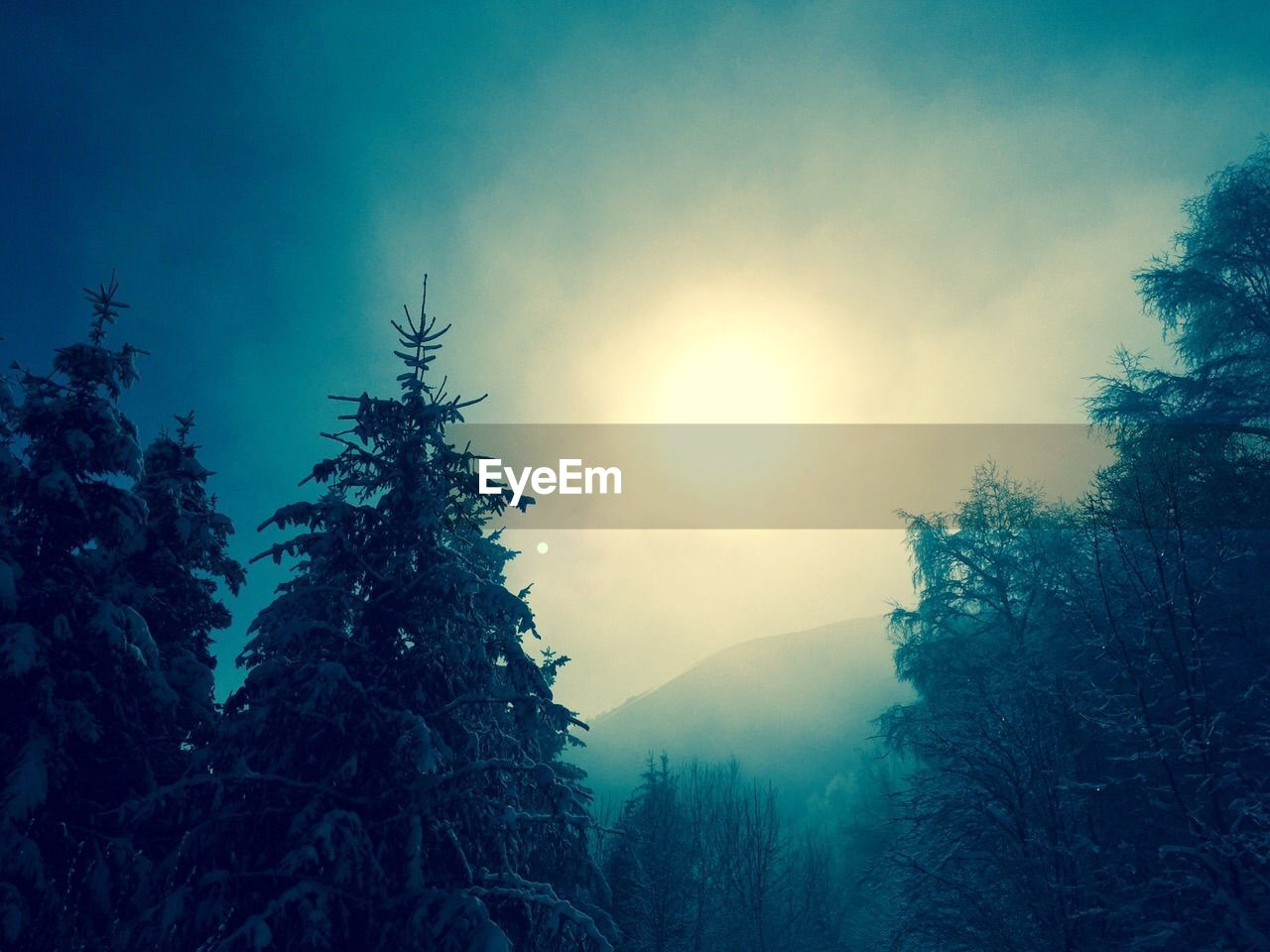 tree, sun, nature, beauty in nature, tranquility, no people, tranquil scene, outdoors, sunlight, silhouette, scenics, low angle view, day, sky, winter, mountain, growth, landscape, forest, cold temperature, branch