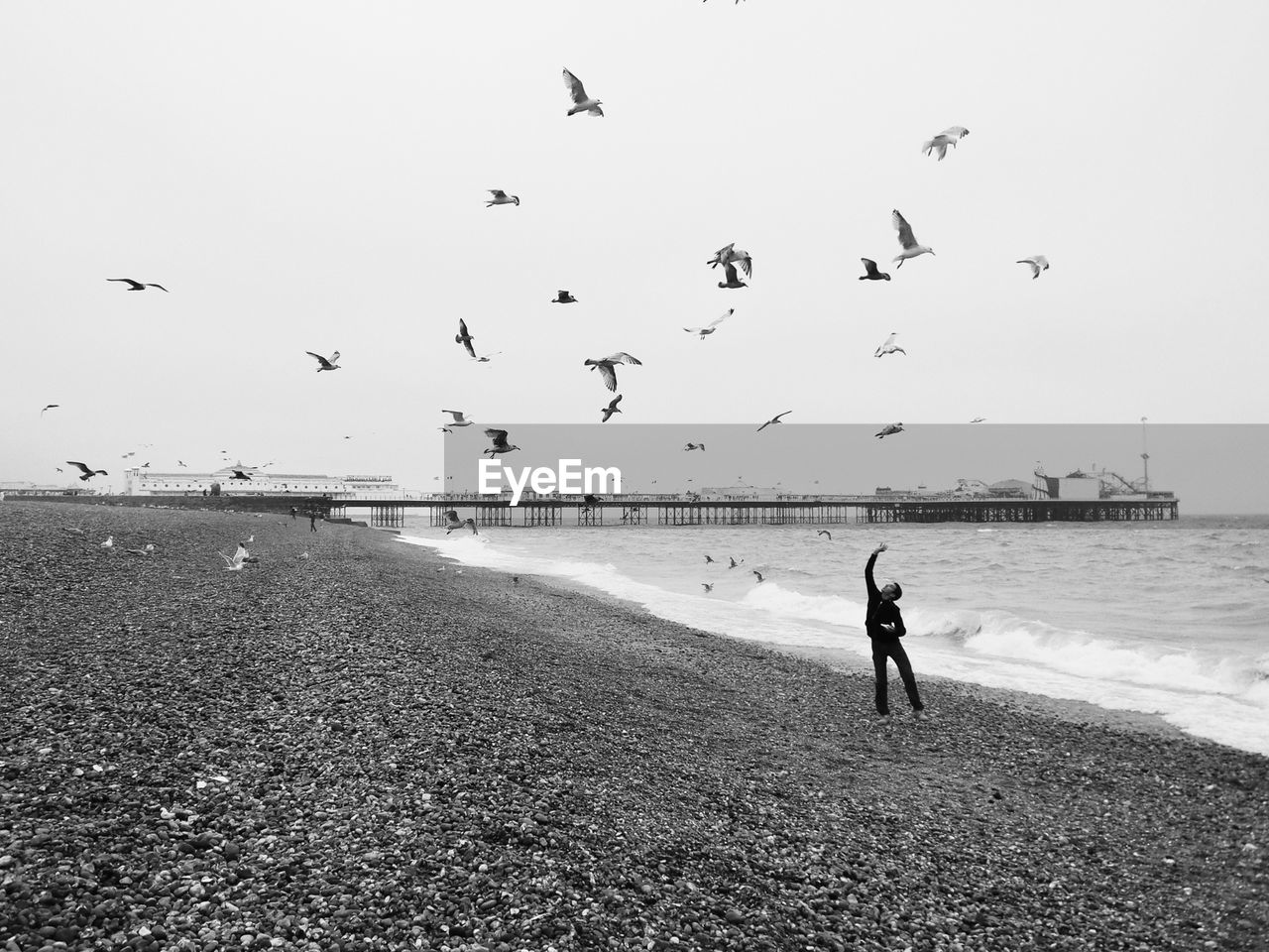 sea, bird, beach, flying, large group of animals, flock of birds, water, real people, nature, motion, full length, animals in the wild, outdoors, mid-air, seagull, one person, sky, sand, beauty in nature, scenics, horizon over water, day, clear sky, spread wings, lifestyles, men, people
