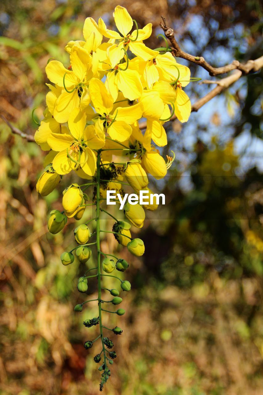 yellow, growth, flower, nature, beauty in nature, plant, day, fragility, outdoors, no people, close-up, freshness, tree, flower head